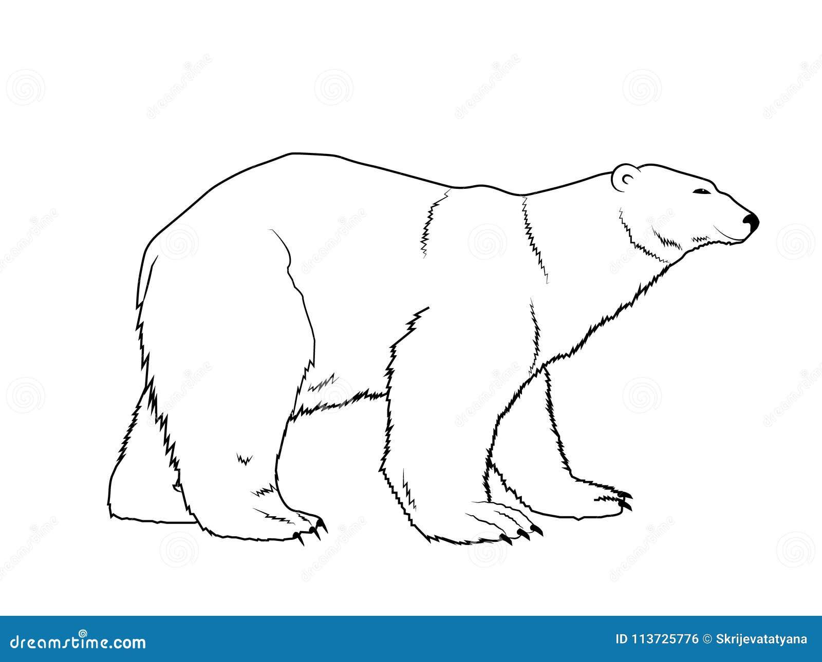 Esquema Dibujado Mano De La Silueta Del Oso Polar Ilustración del ...