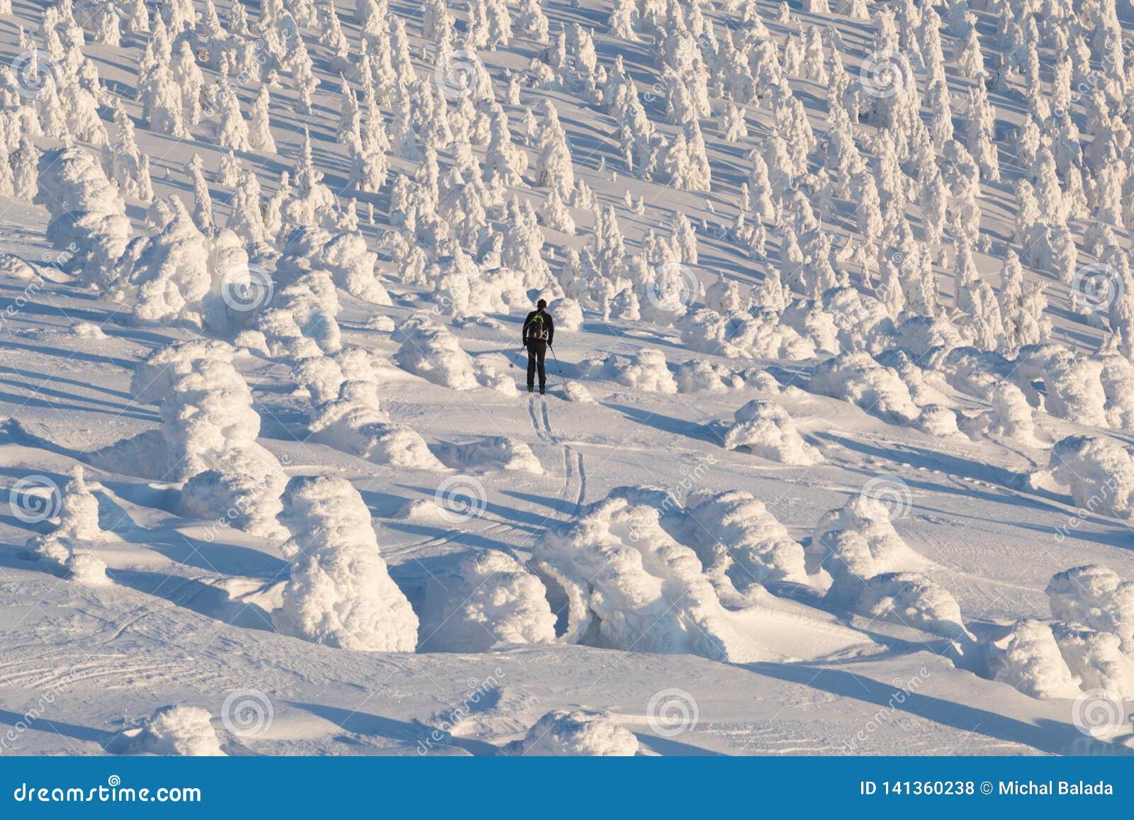 Esquiador de Backcountry que sube hacia un bosque nevado del árbol de navidad en un esquiador hermoso del día soleado que esquía