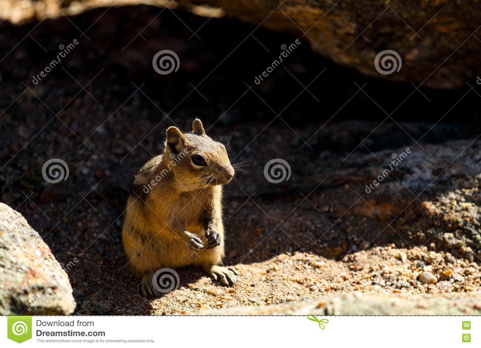 Esquilo em Rocky Mountain National Park