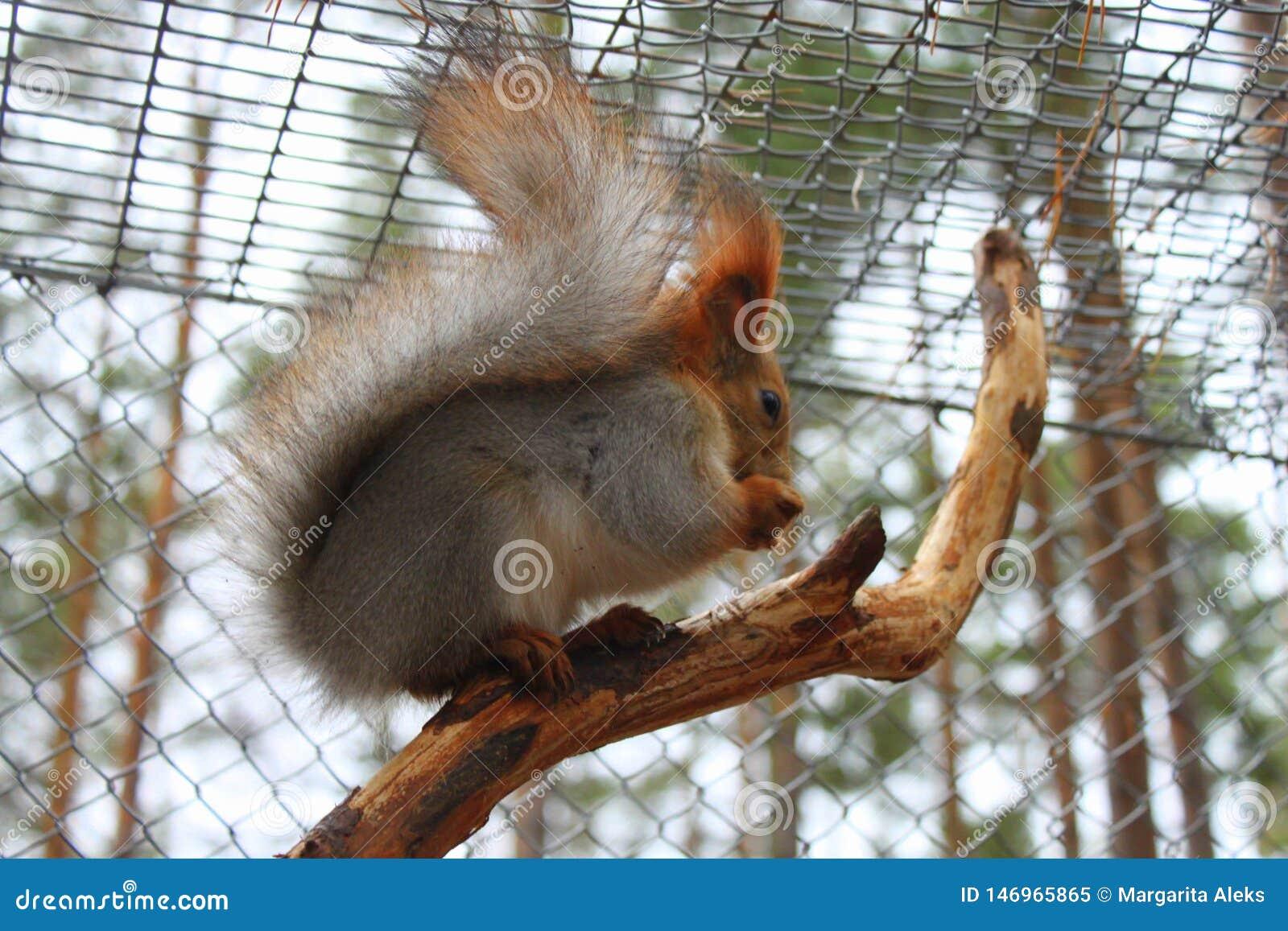 Esquilo que senta-se em um ramo