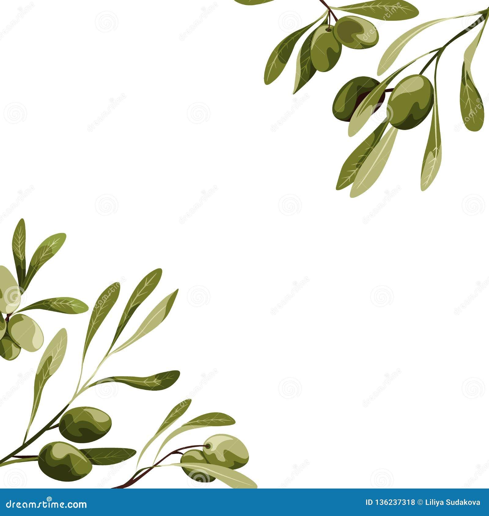 Esquinas del vector con la decoración del olivo Ejemplo de la comida del vegano