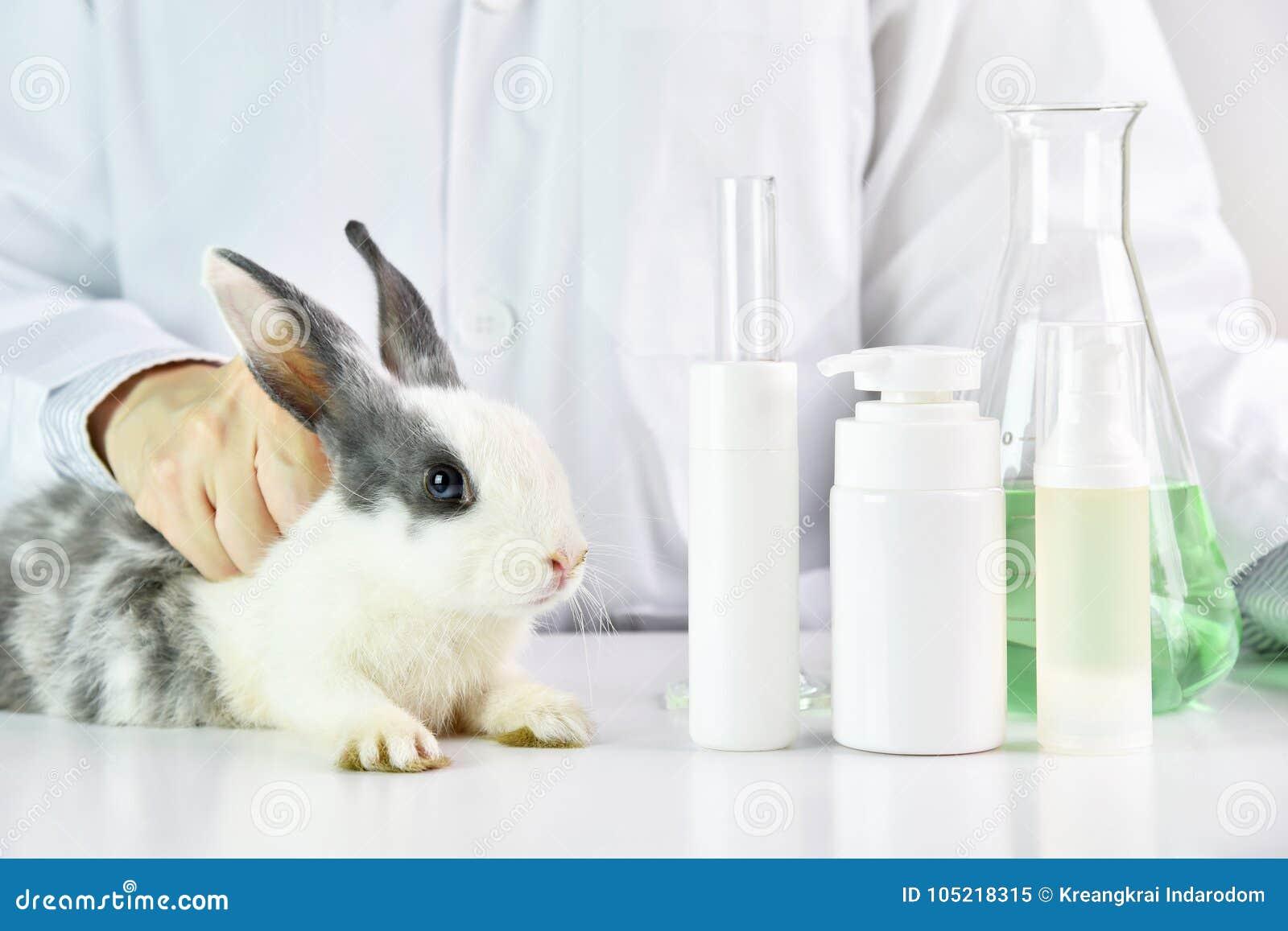 Essai de scientifique sur l animal de lapin dans le laboratoire chimique