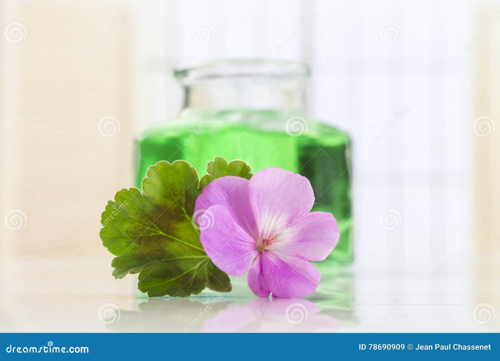 Essence de géranium essentielle en bouteille et fleurs