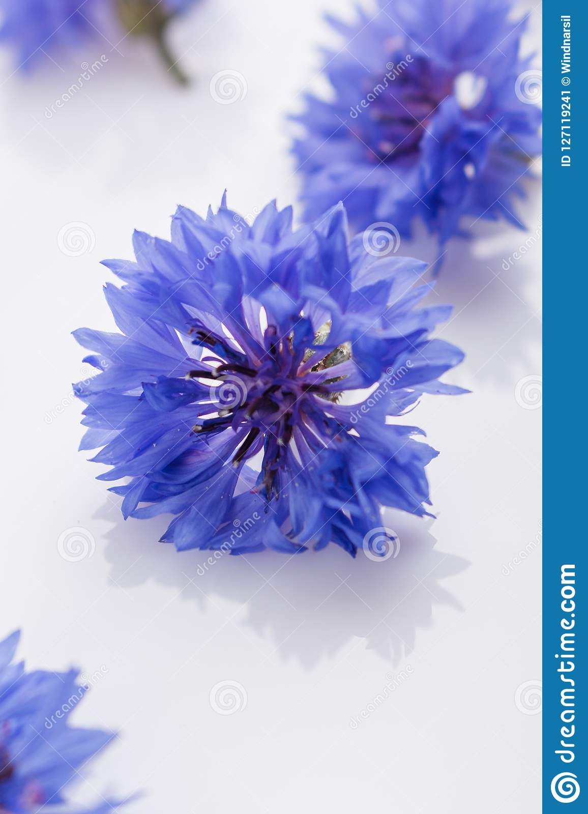 Essential oil of cornflower on a white background