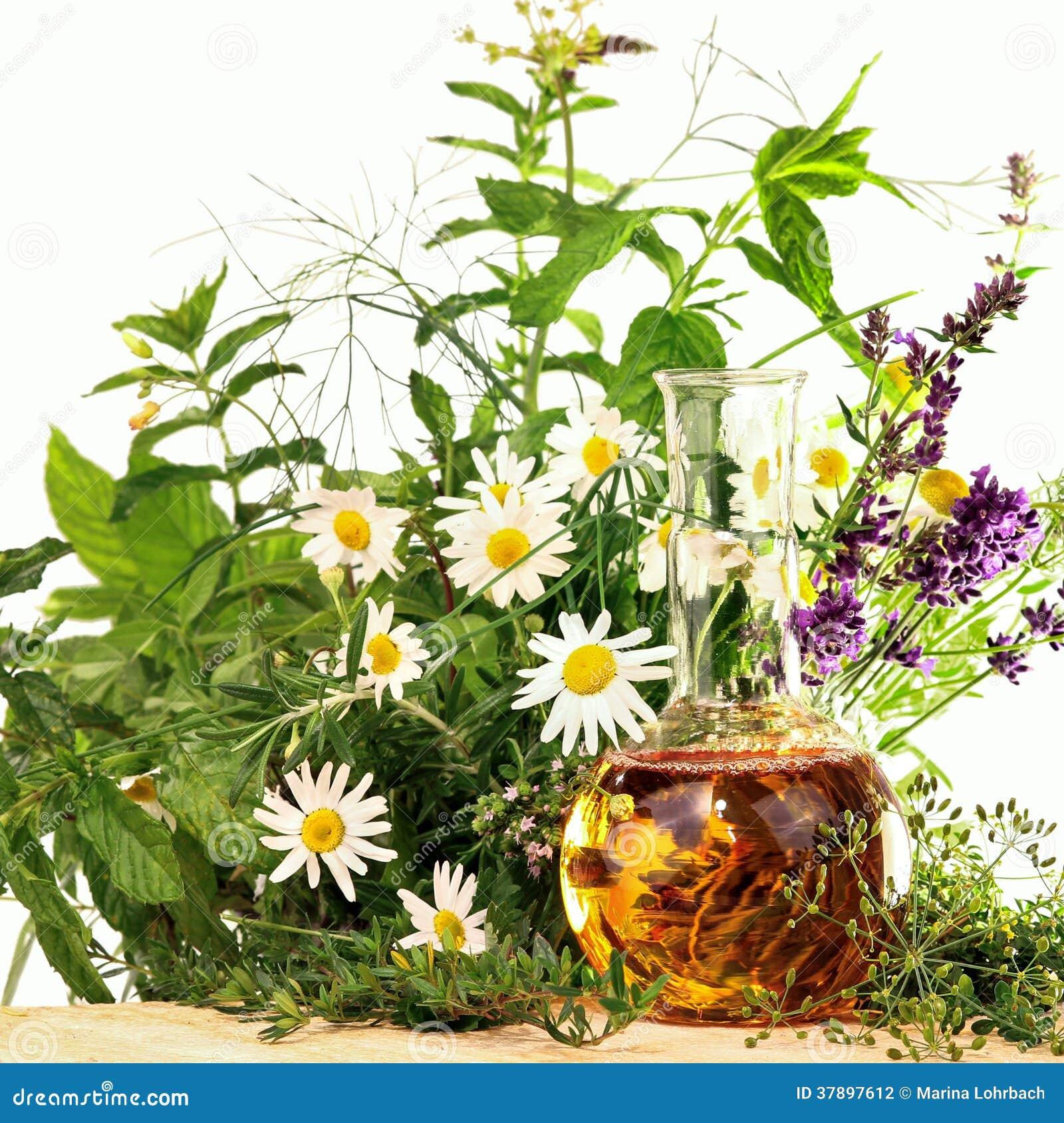 Le Piante Medicinali : Essenza con le piante medicinali e erbe fresche