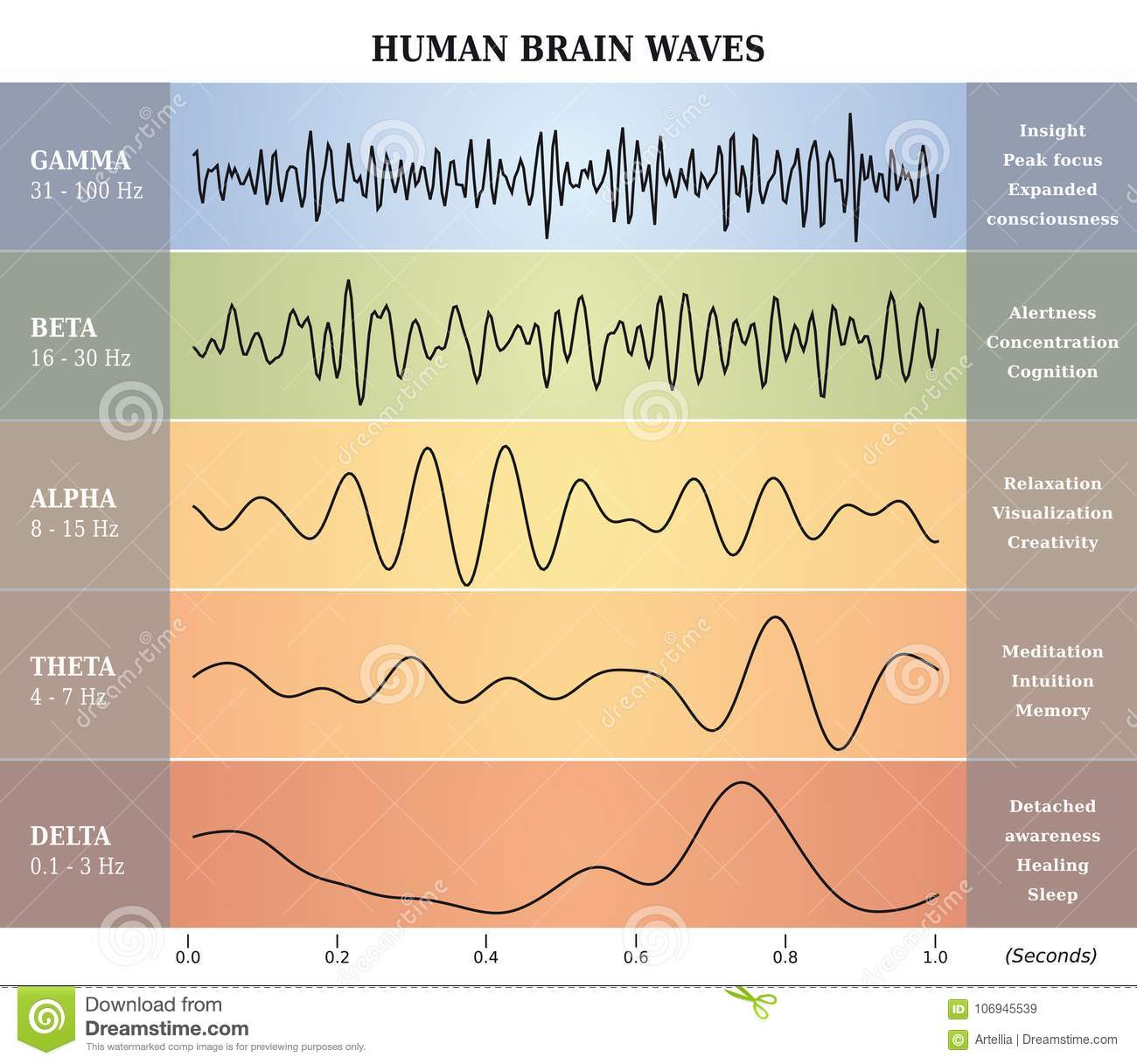 Essere umano Brain Waves Diagram/grafico/illustrazione