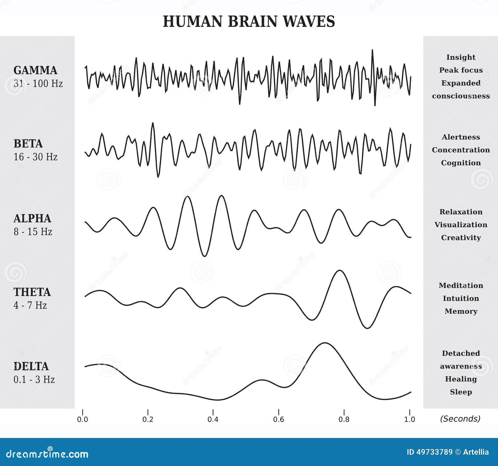 Essere umano Brain Waves Diagram/grafico/illustrazione