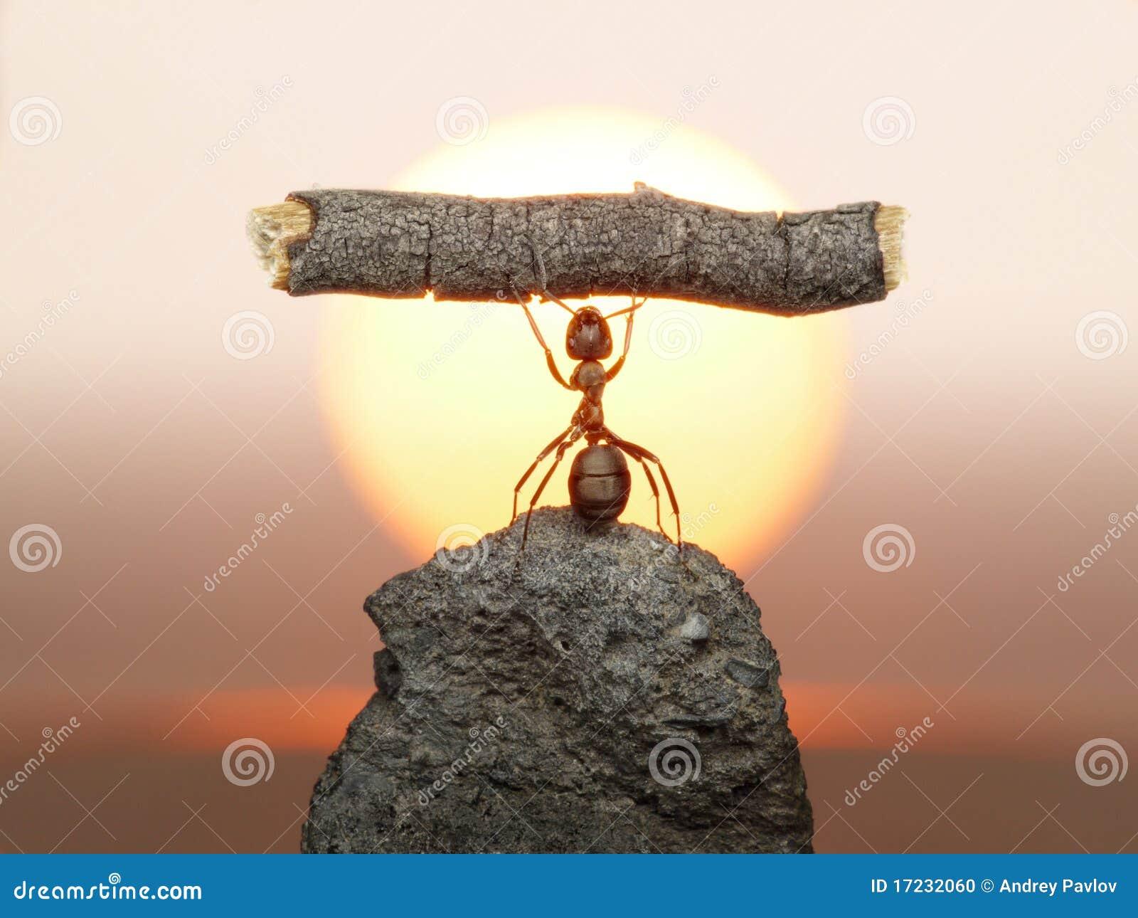Estátua do trabalho, civilização das formigas