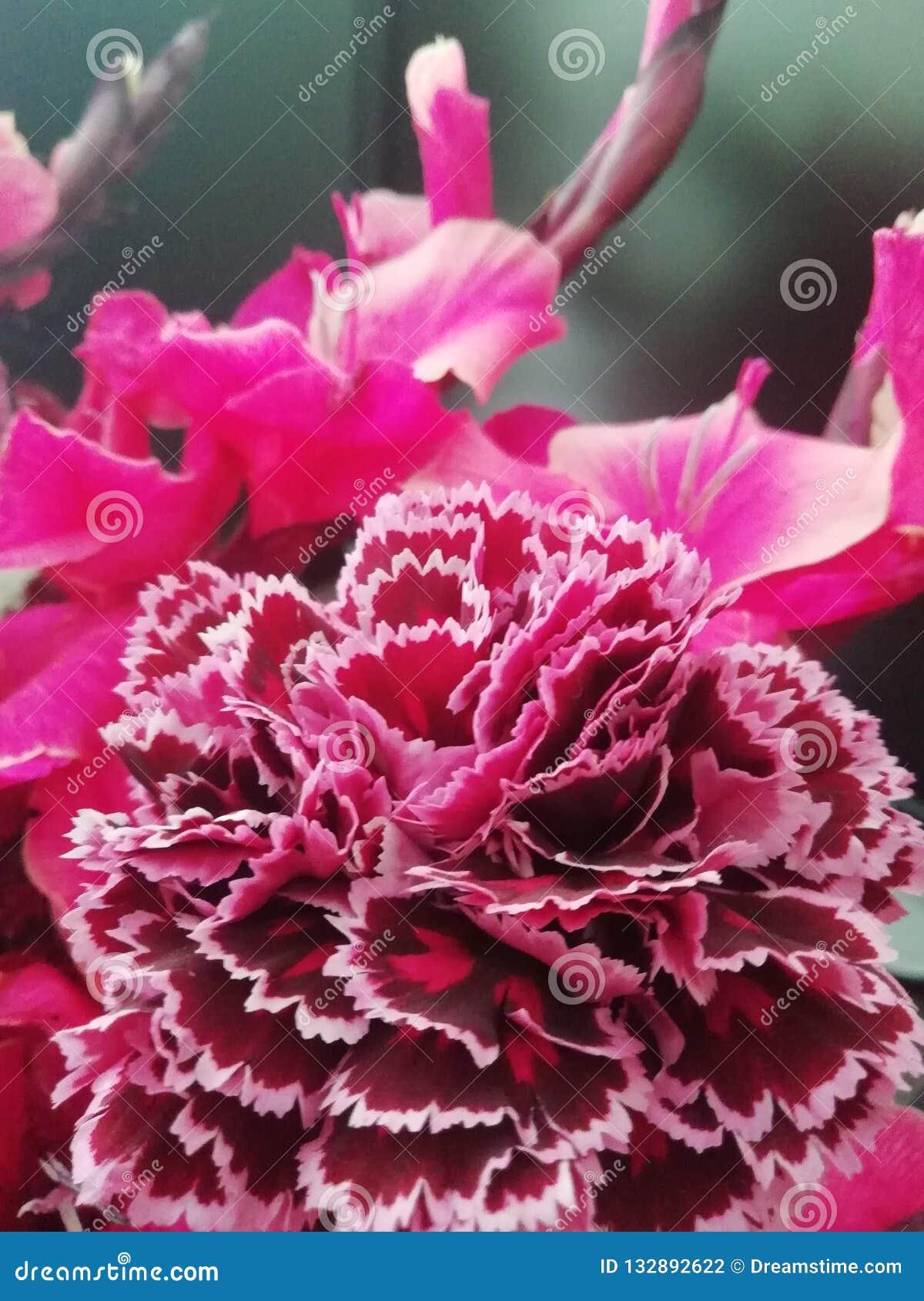 e62124334ef Estético Diário Oferecido Por Natureza Foto de Stock - Imagem de ...