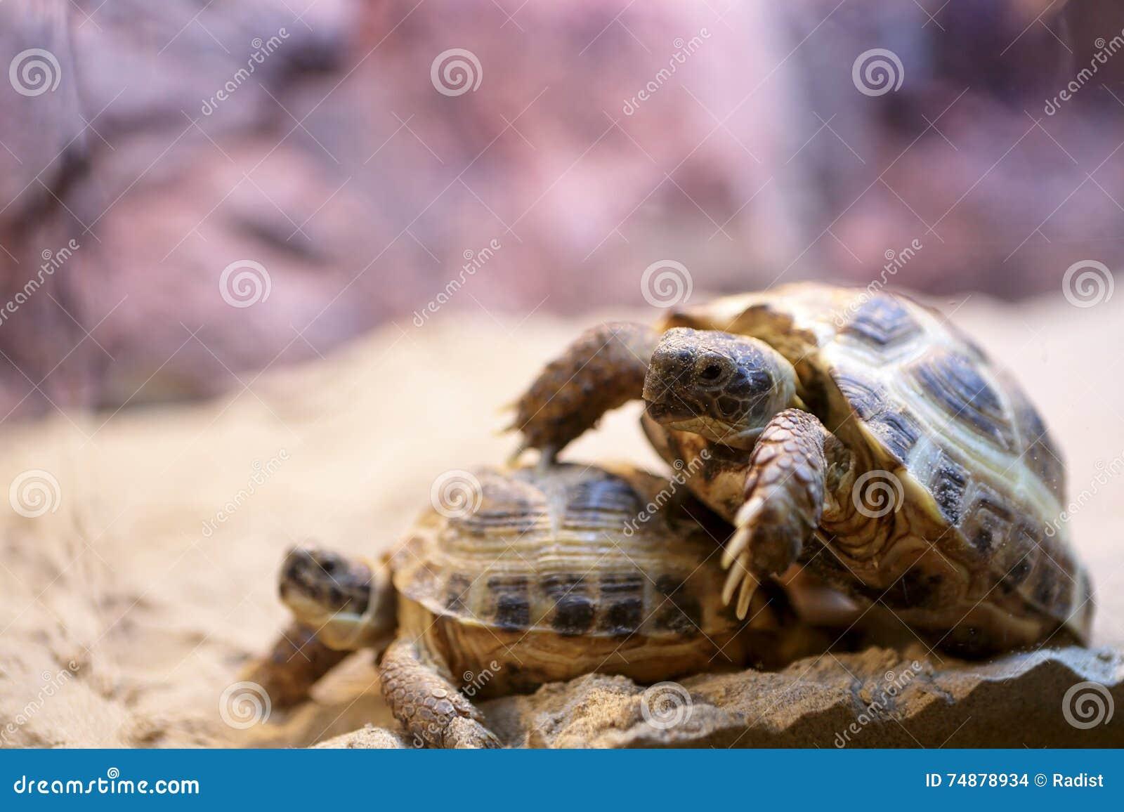 Estação de acoplamento das tartarugas