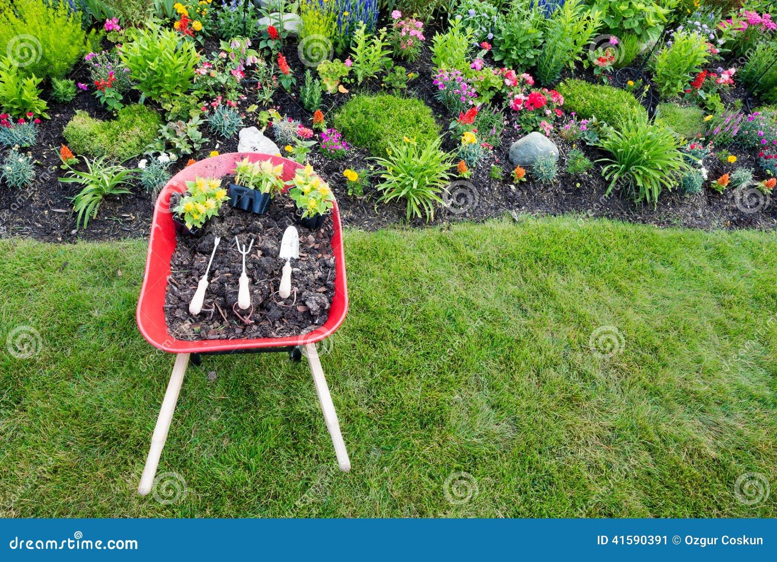 Establecimiento de celosia amarillo en un macizo de flores ornamental