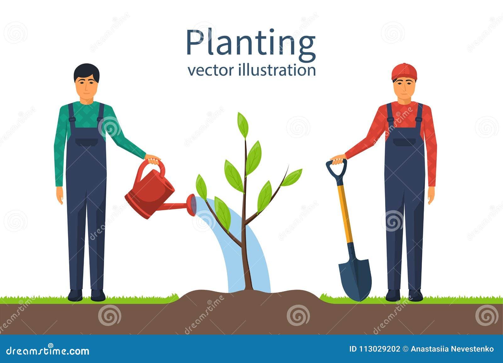 Establecimiento de vector del árbol