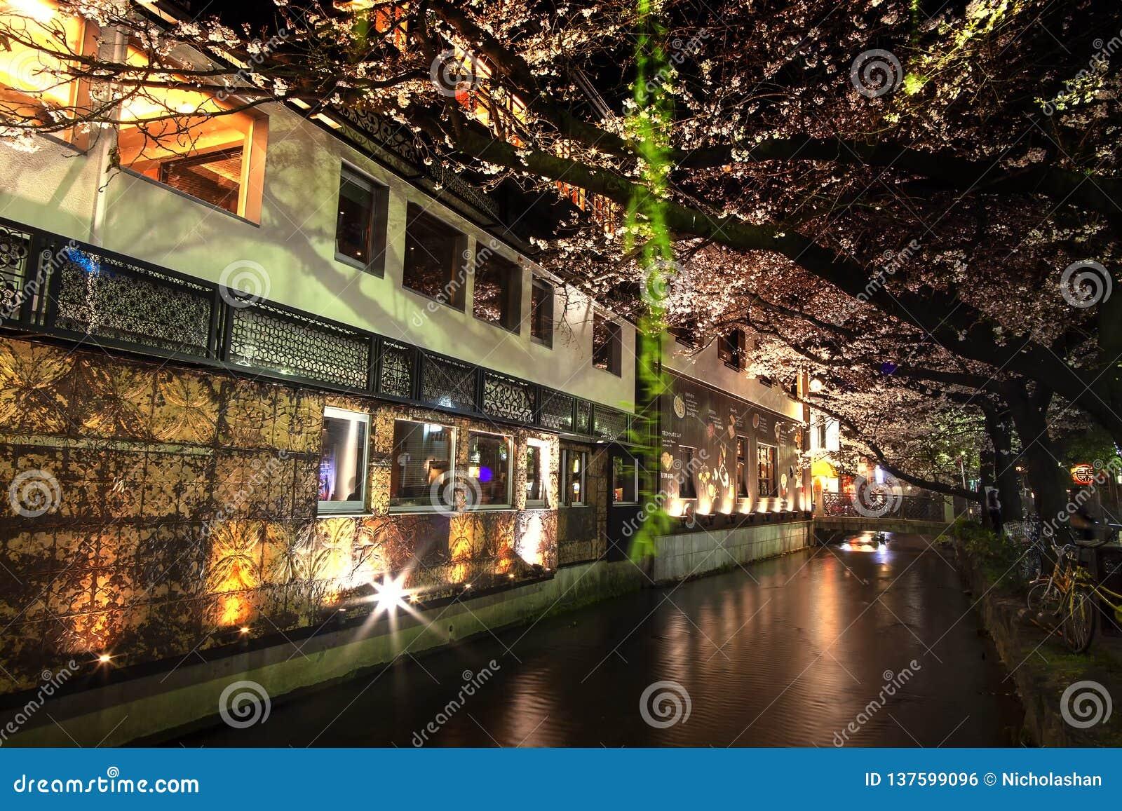 Estación de la flor de cerezo de Japón en Kyoto a principios de marzo cada año, Japón