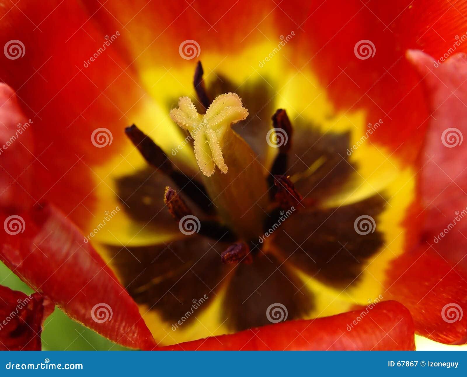 Estambre de la flor