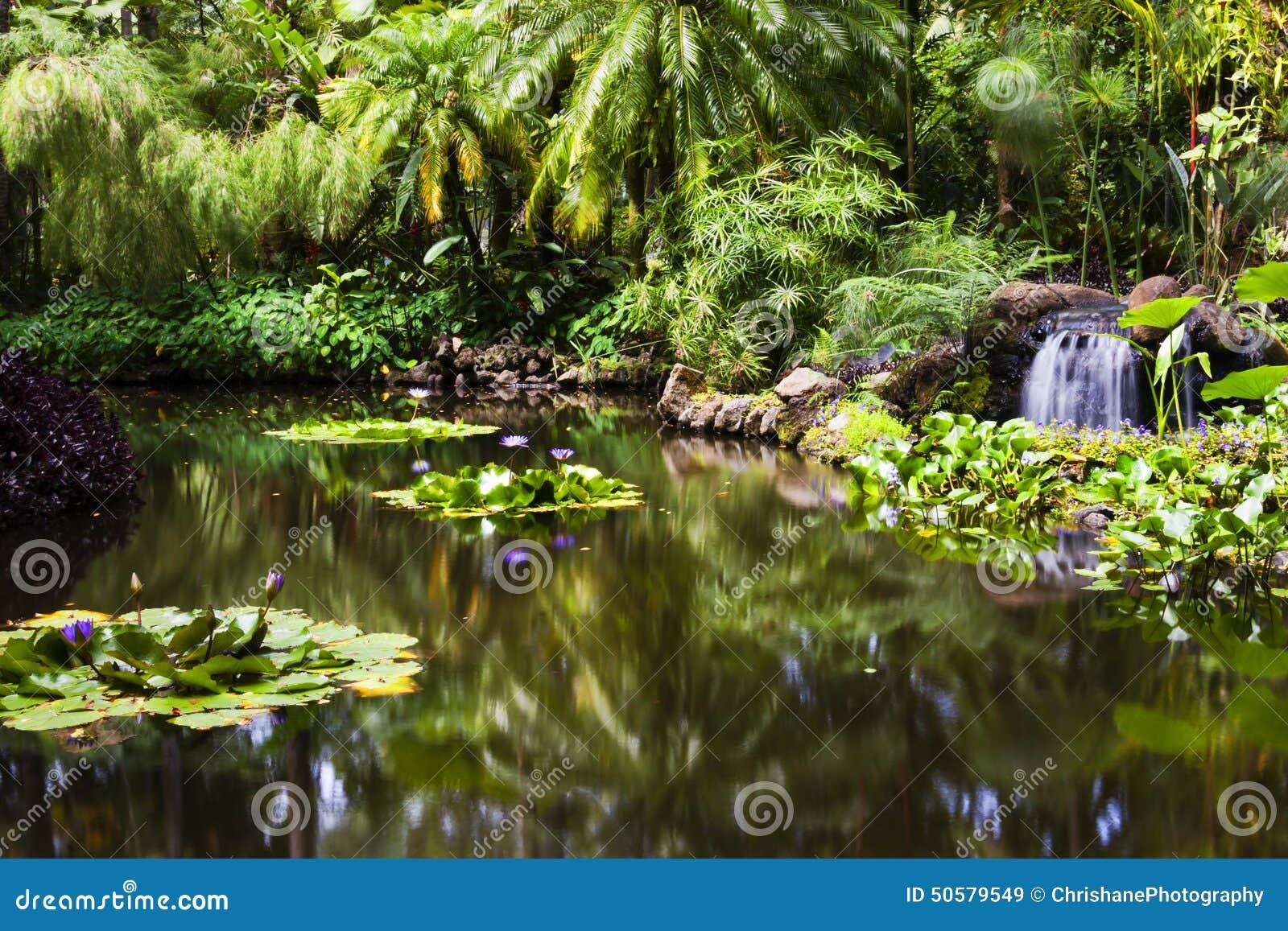 Estanque de peces del oro en el jard n bot nico tropical for Estanque de peces en el jardin