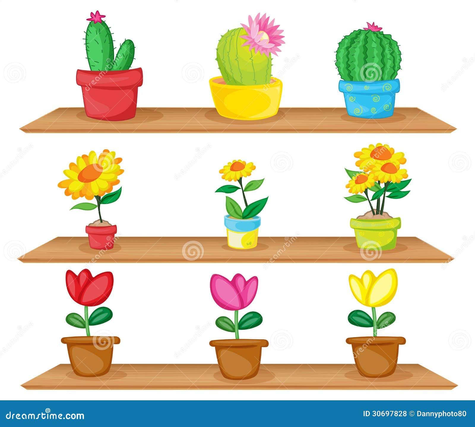 estantes de madera con las plantas ornamentales