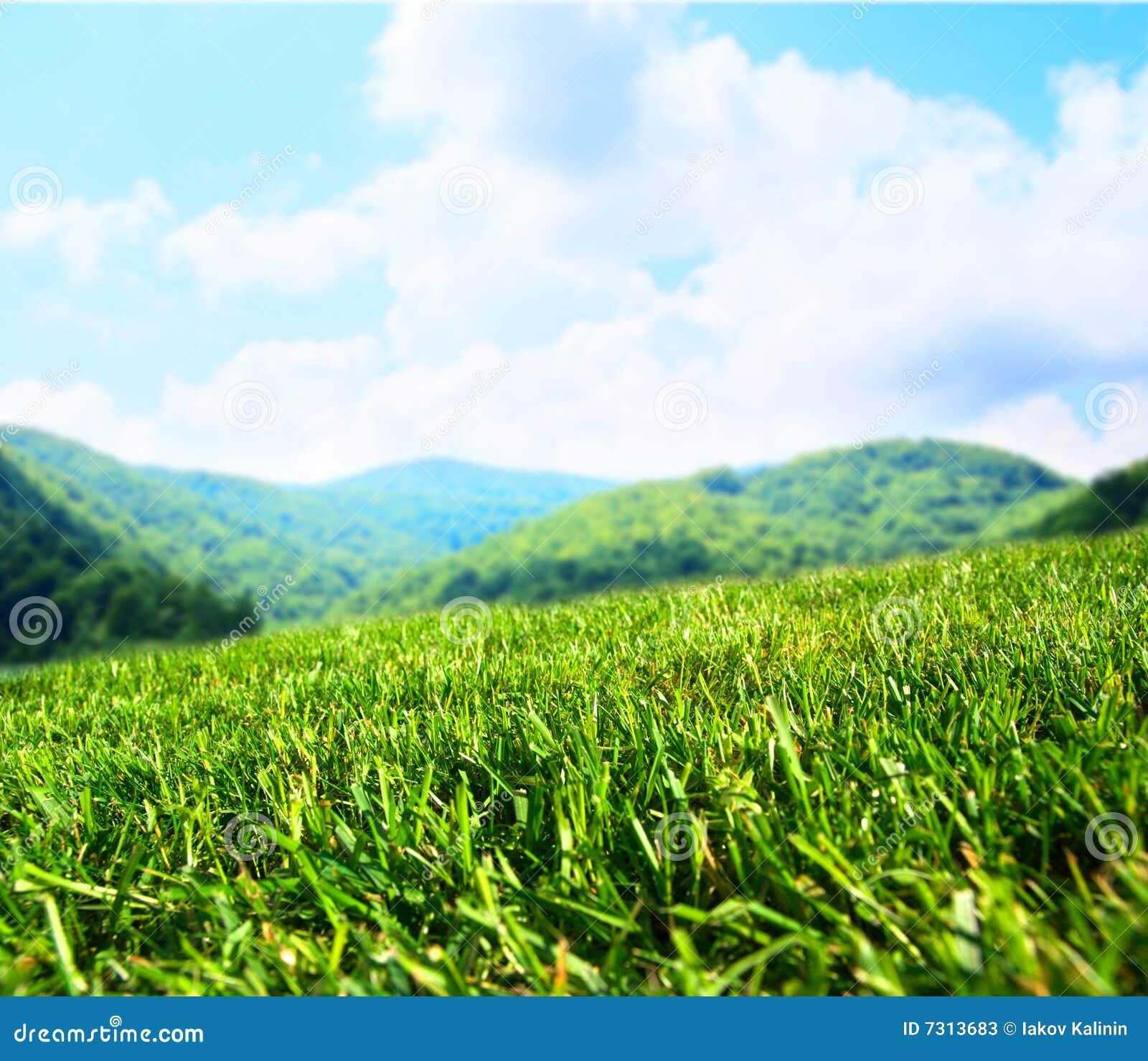 Estate delle montagne del campo