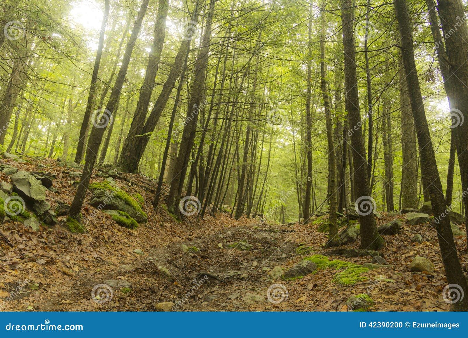 Estate di legni della traccia