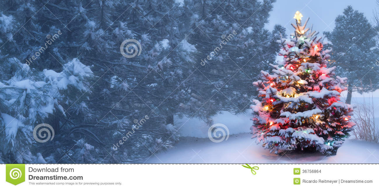 Este árbol brilla intensamente brillantemente en mañana de la Navidad de niebla nevada