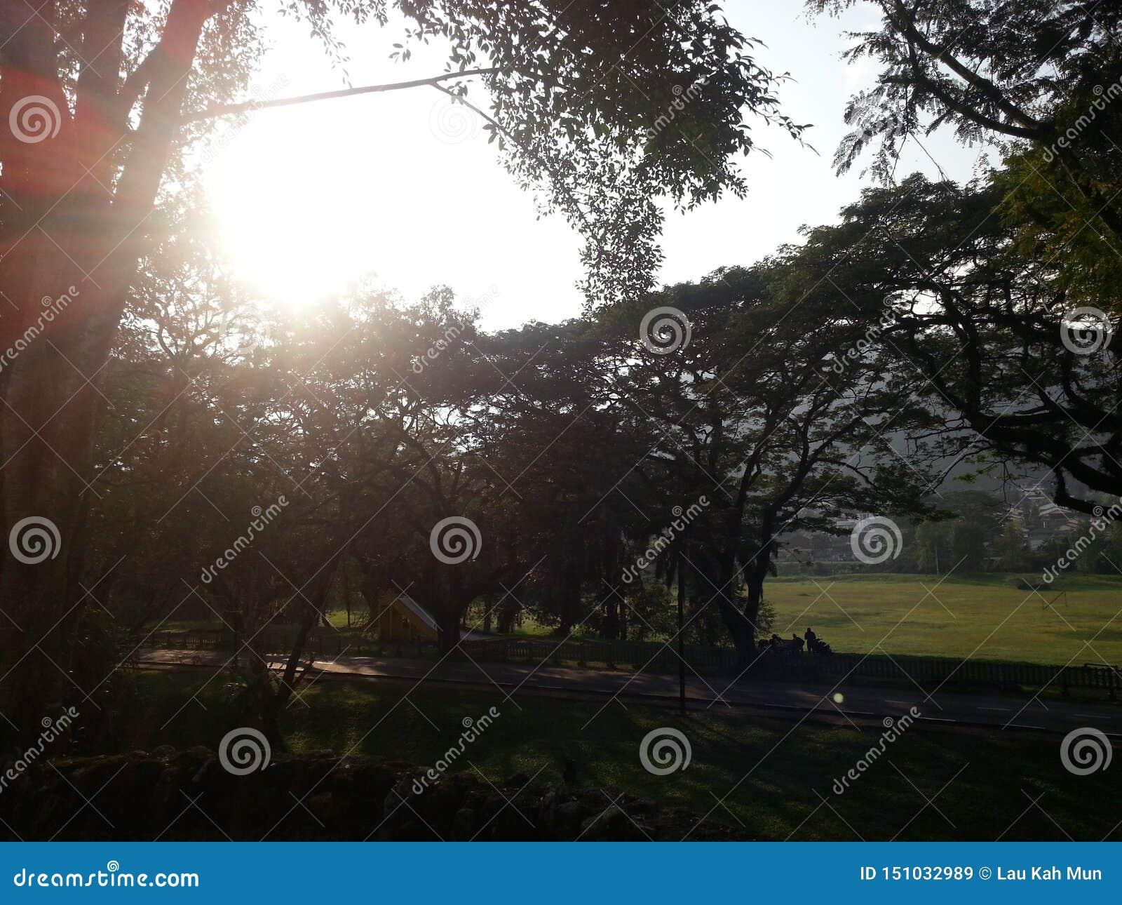 Este relógio de Lergarden o nascer do sol sob a árvore do parque