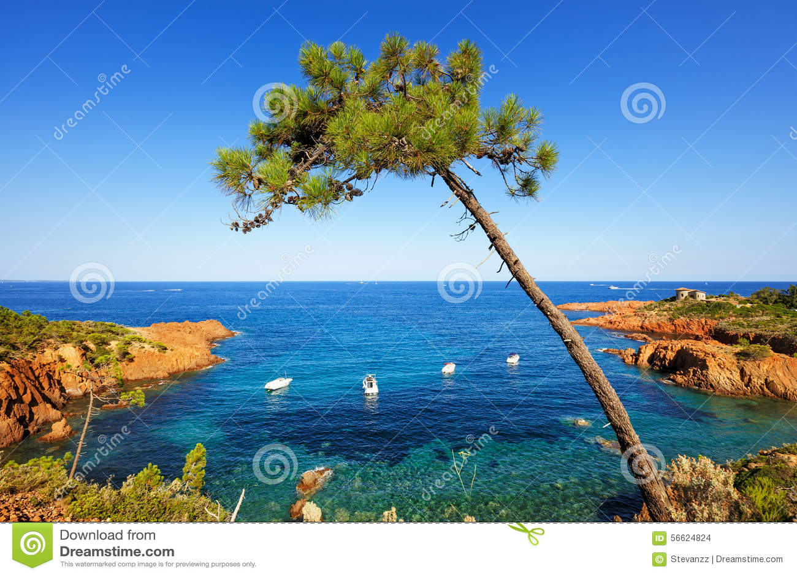 Esterel arbre roches chouent la c te et la mer cote - Arbre provencal ...