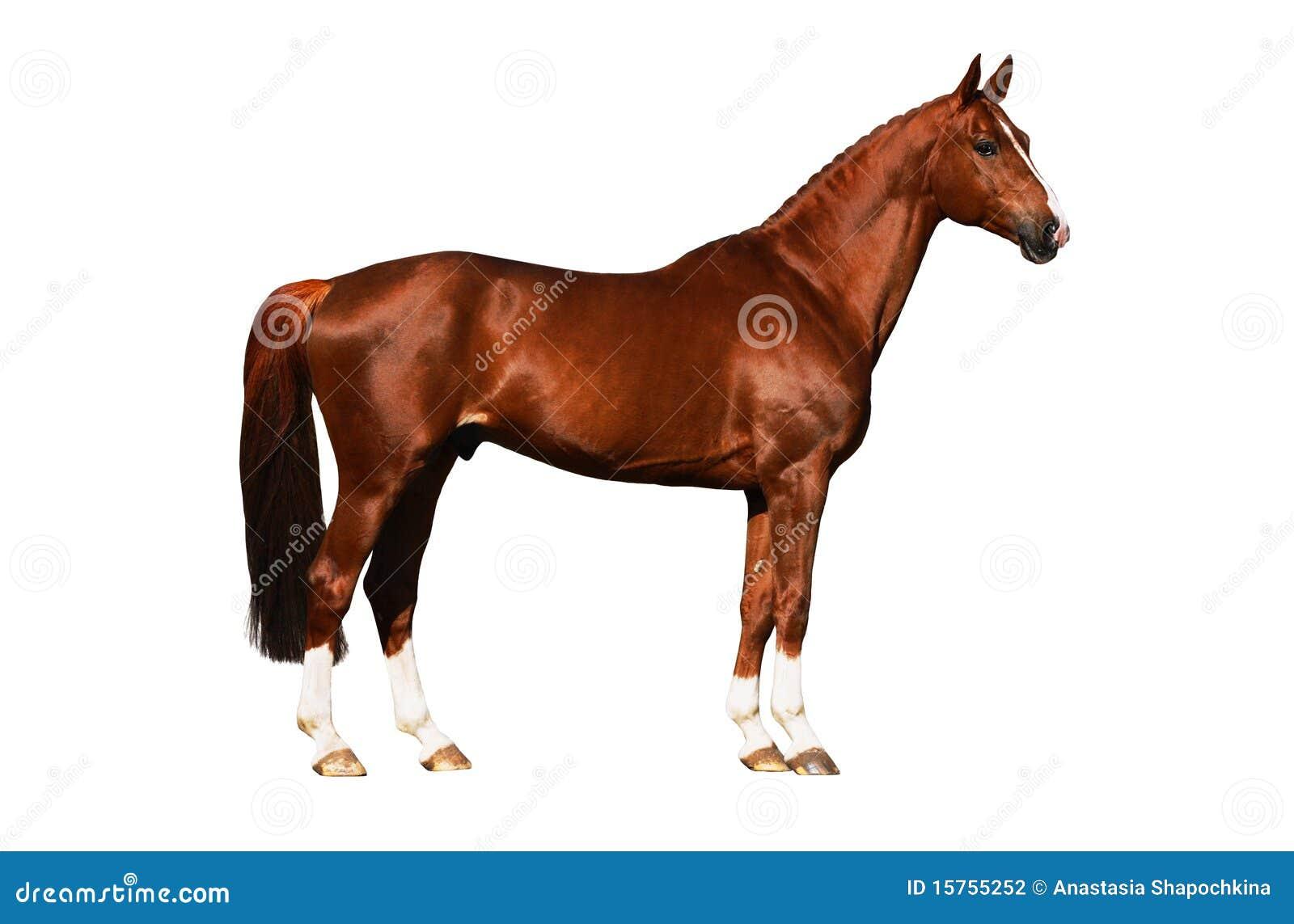 Esterno del cavallo isolato