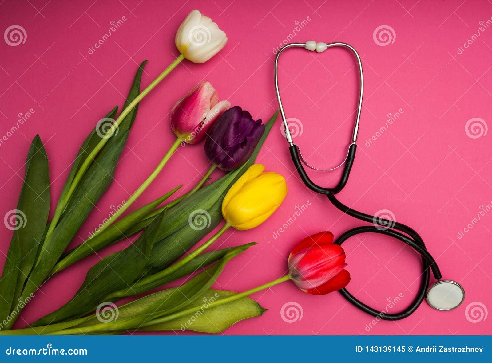 Estetoscópio e tulipas coloridas em um fundo cor-de-rosa