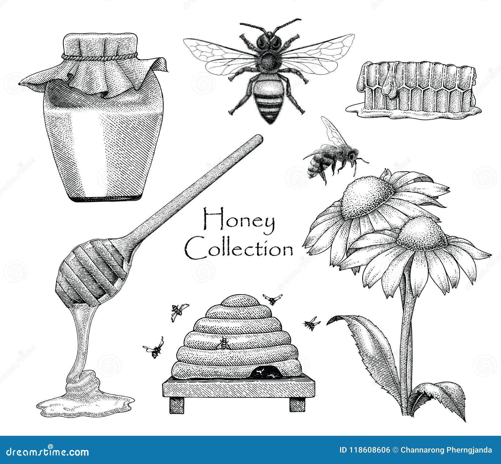 Estilo determinado del grabado del dibujo de la mano de la colección de la abeja en el backgro blanco