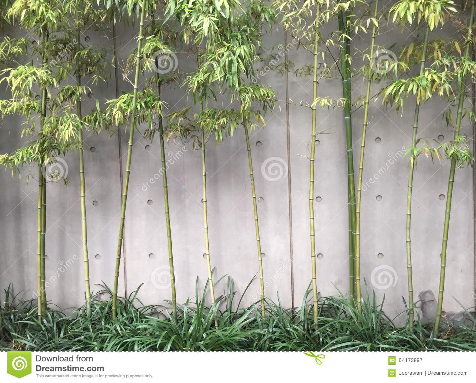 estilo moderno de bamb del jardn fotografa editorial