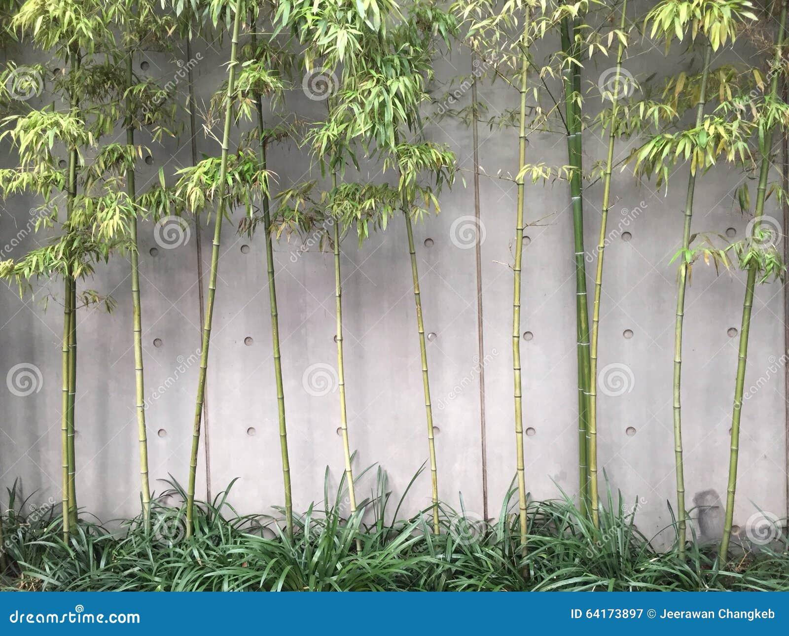 Estilo moderno de bambu do jardim fotografia editorial - Bambu para jardin ...