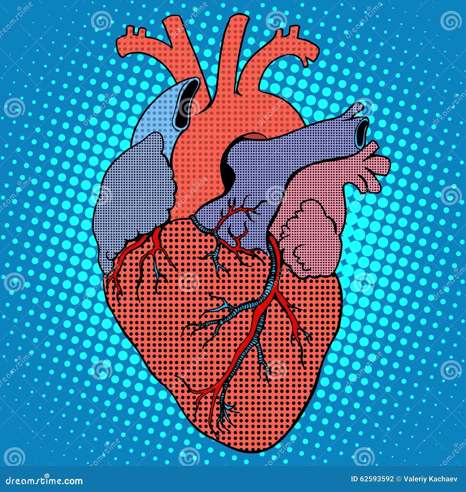 Estilo Retro Del Corazón Humano De La Anatomía Ilustración del ...