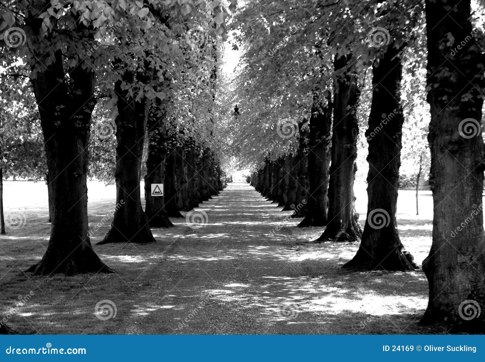 Estrada alinhada com árvores