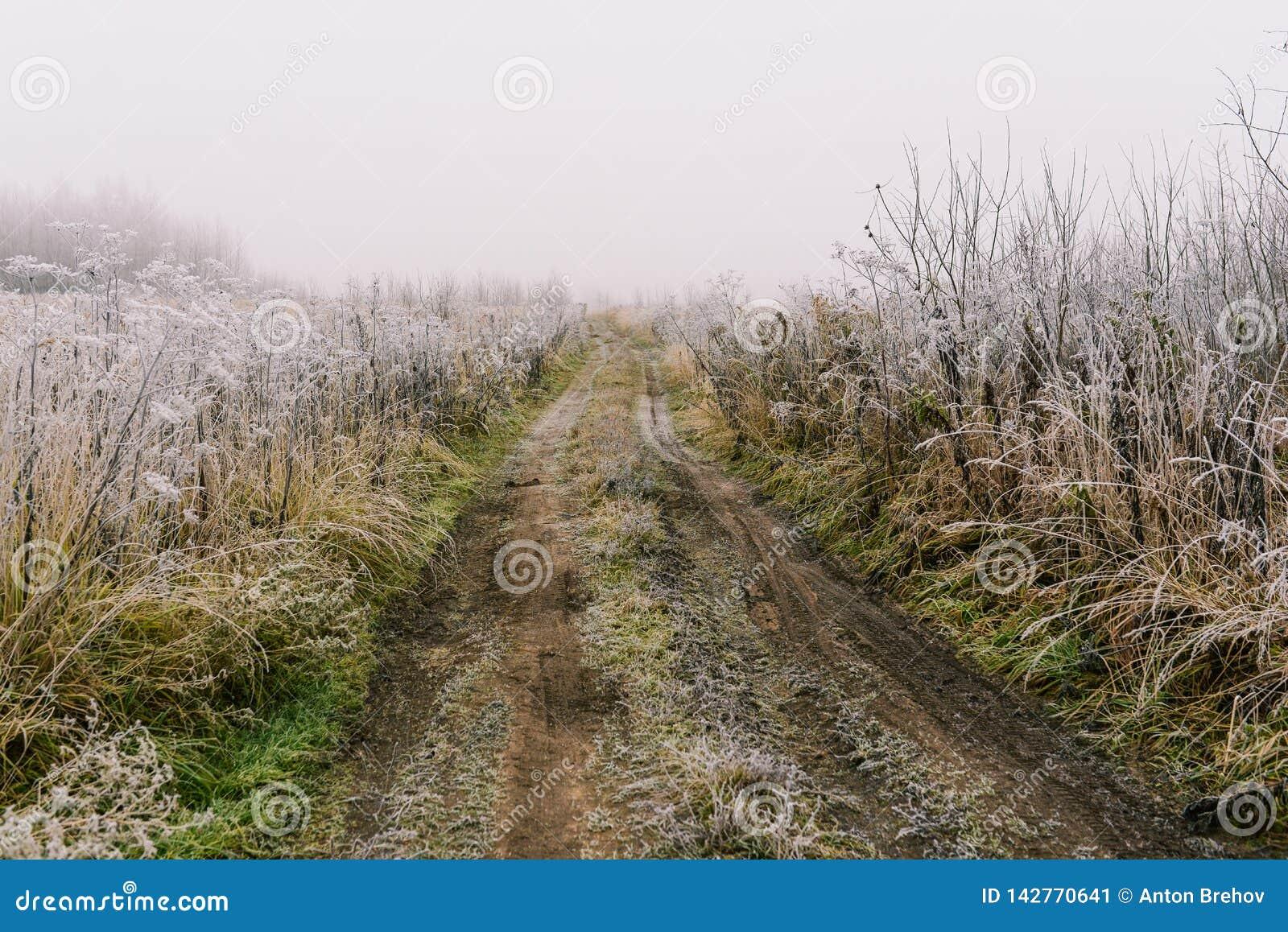 Estrada ao campo Névoa e geada da manhã na grama Paisagem rural cedo na manhã Estrada de terra no campo