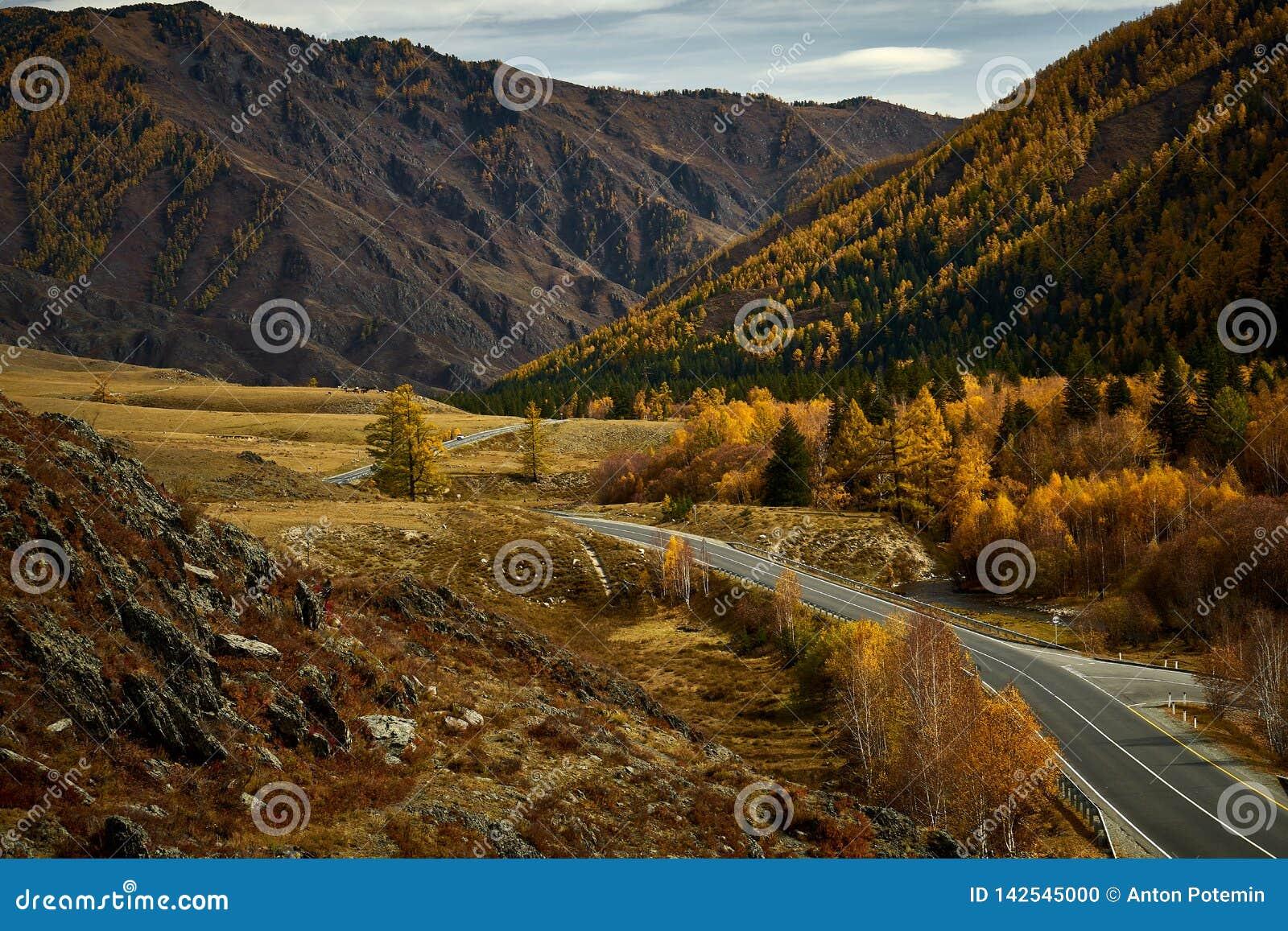 Estrada asfaltada às montanhas de Altai que passam com a paisagem do outono