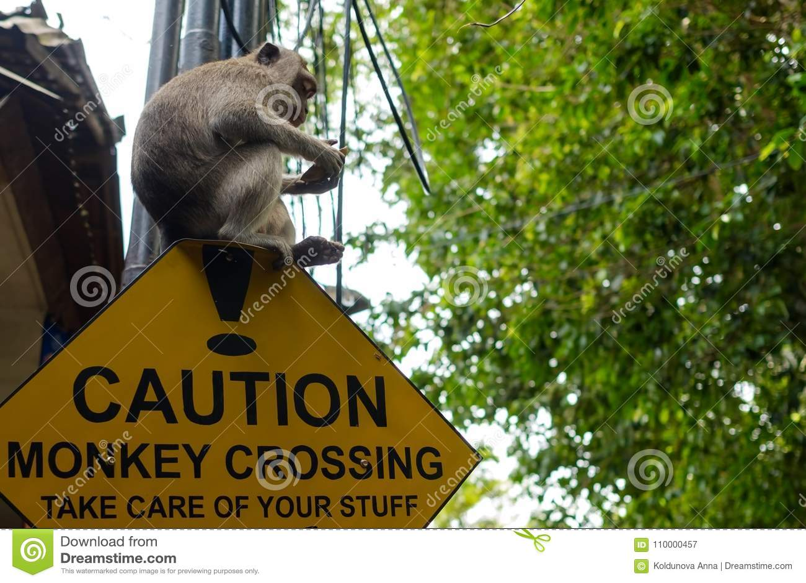 A estrada assina dentro o cuidado de Ásia Cruzamento do macaco com o macaco que senta-se nele