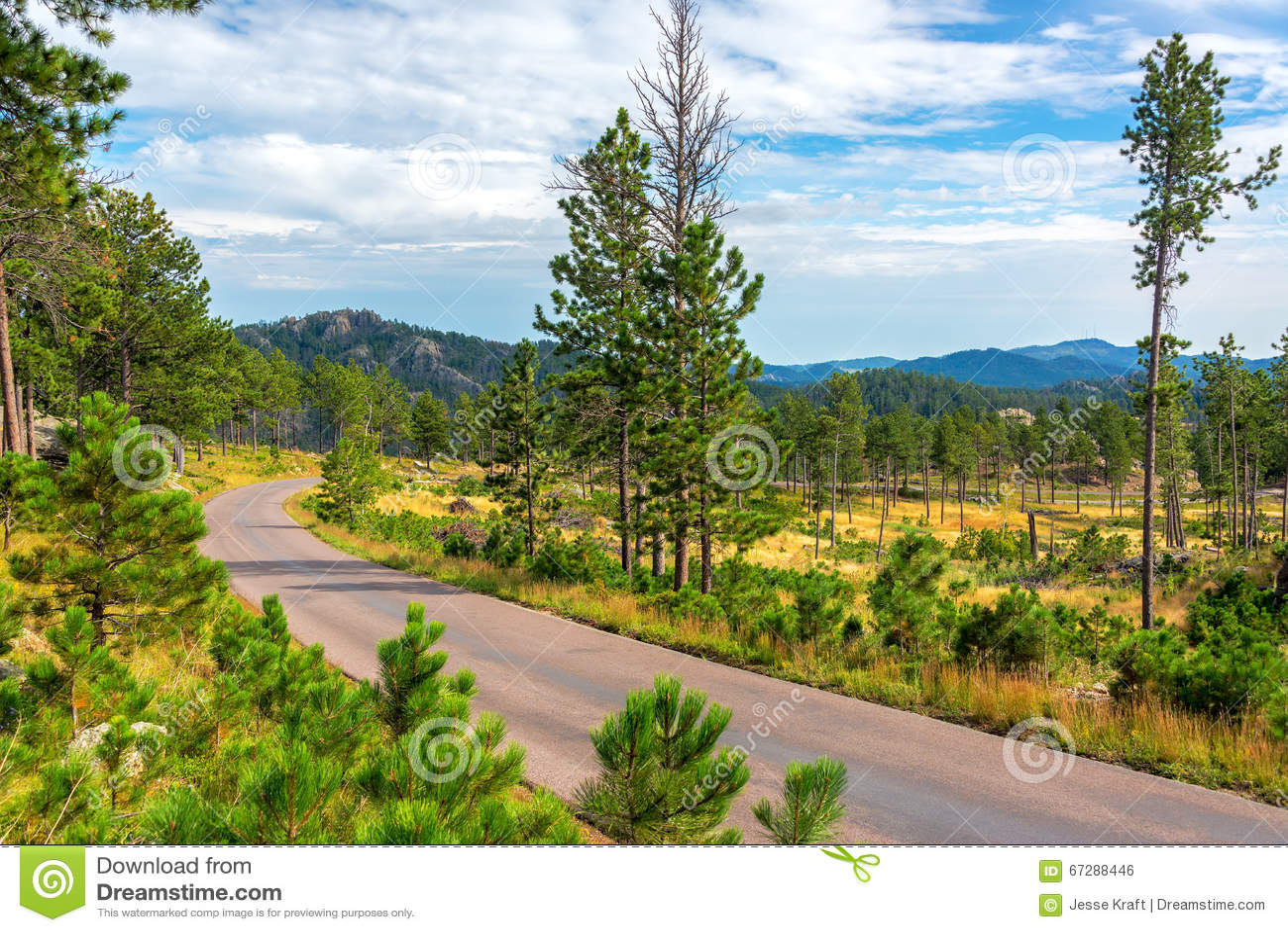 Estrada através de Custer State Park