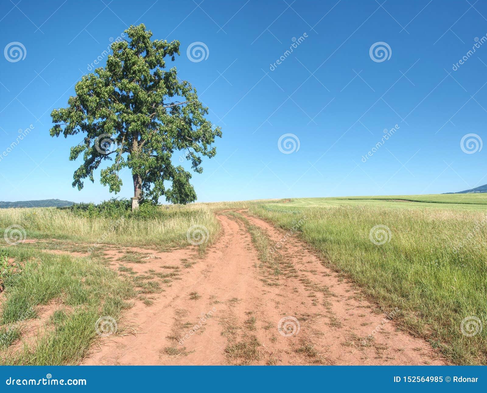 Estrada de exploração agrícola vermelha entre campos da cevada Estrada de terra empoeirada completamente