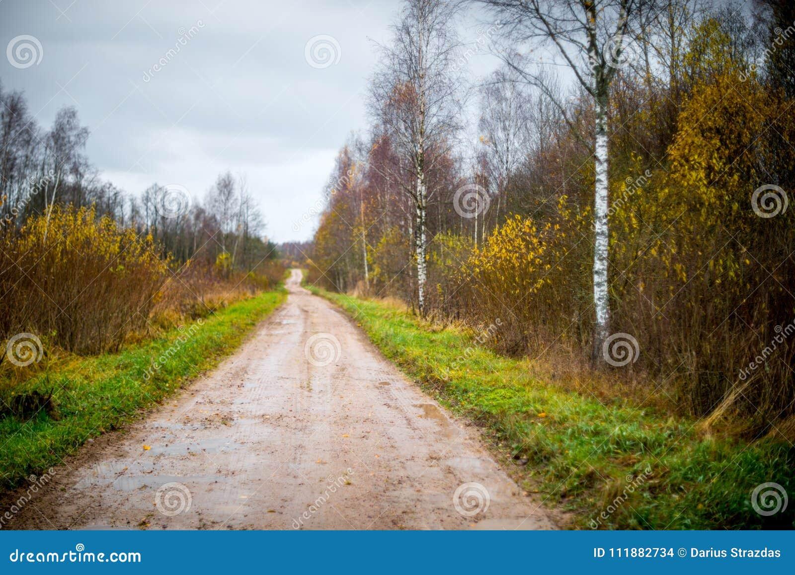 Estrada de floresta na queda atrasada