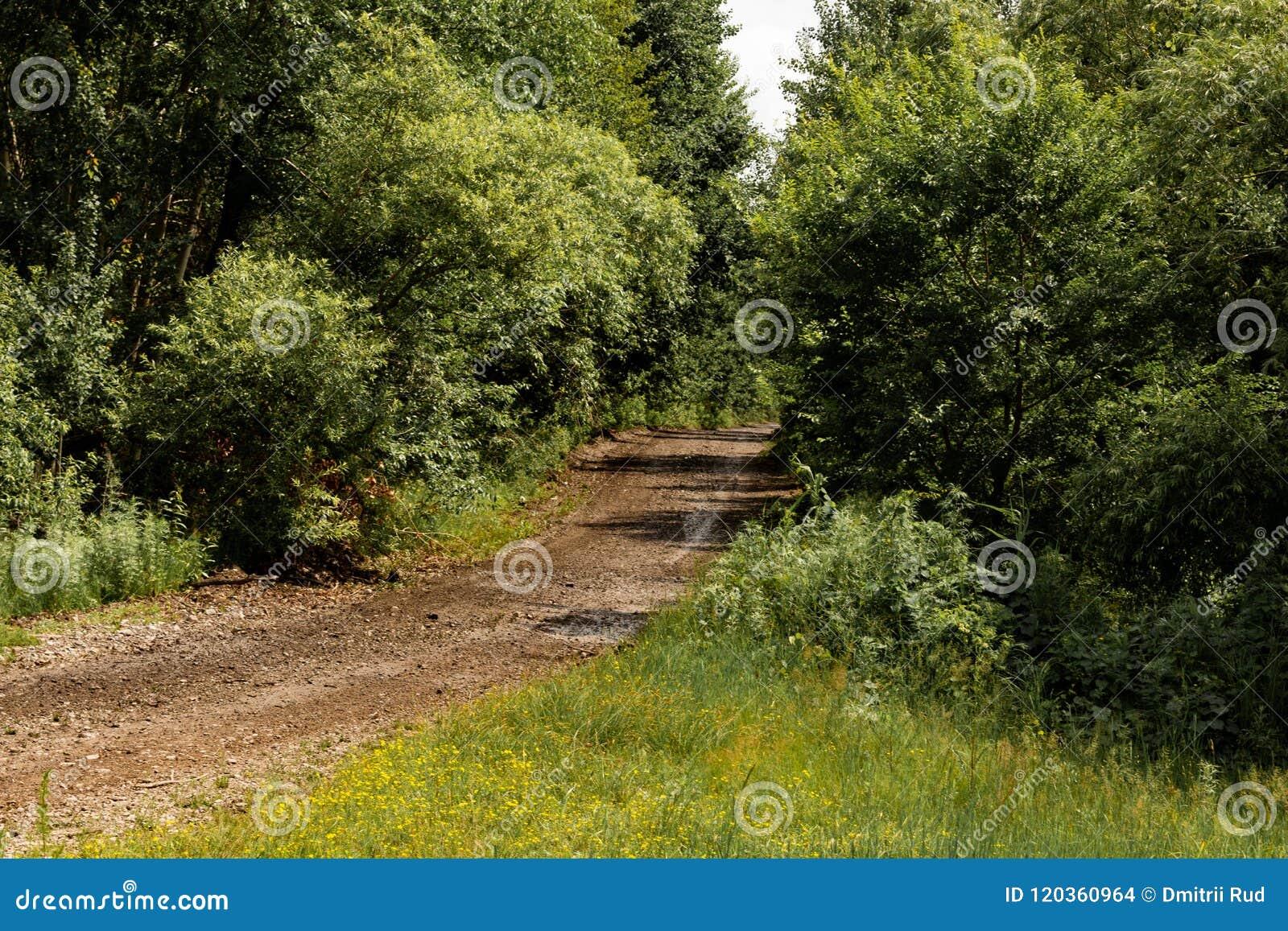 Estrada de floresta pitoresca