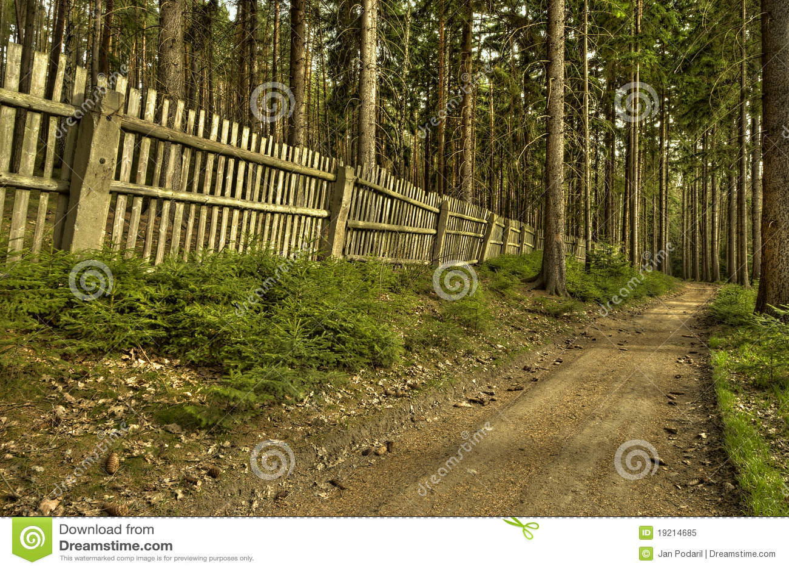 A estrada de floresta velha