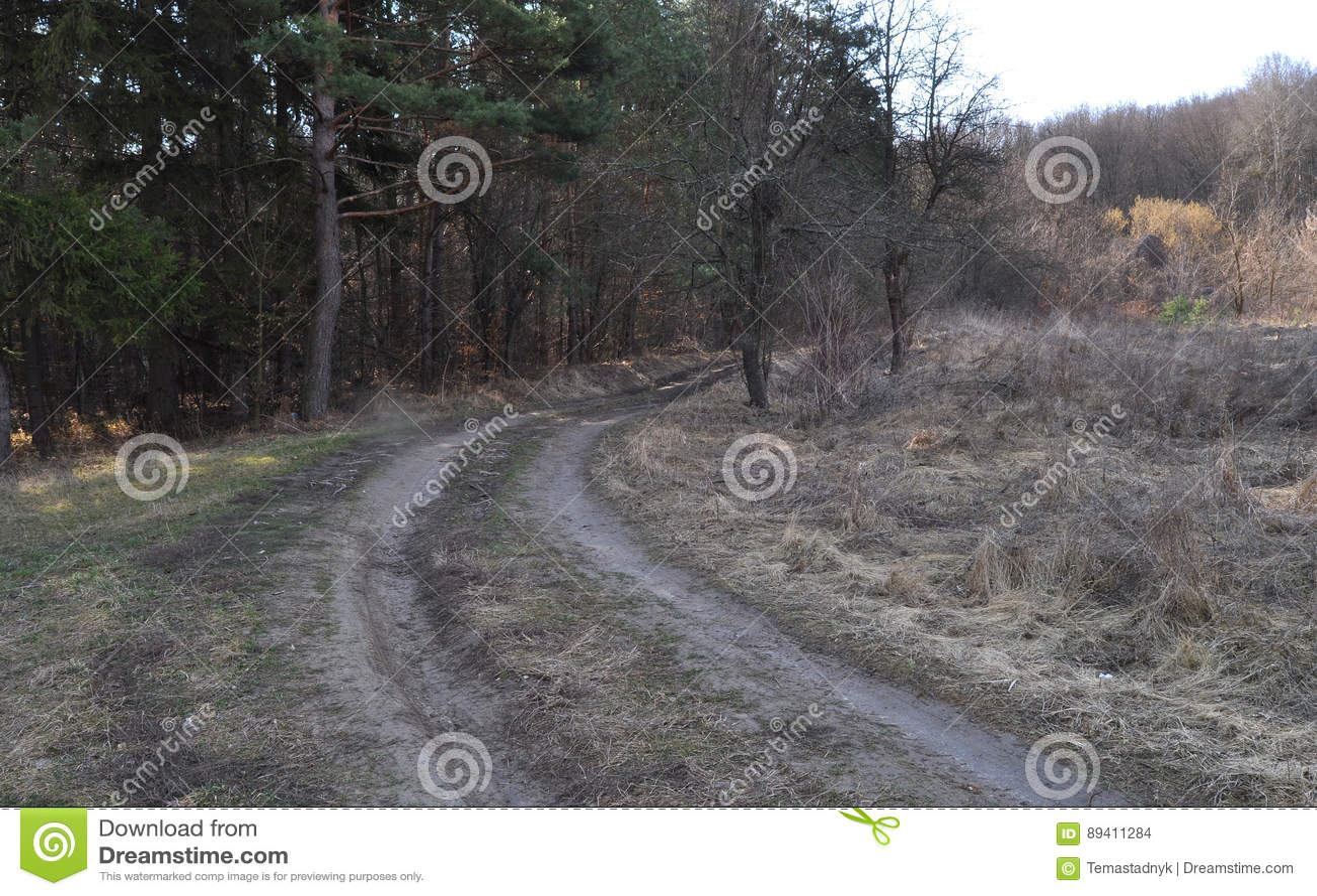 Estrada de terra através da floresta
