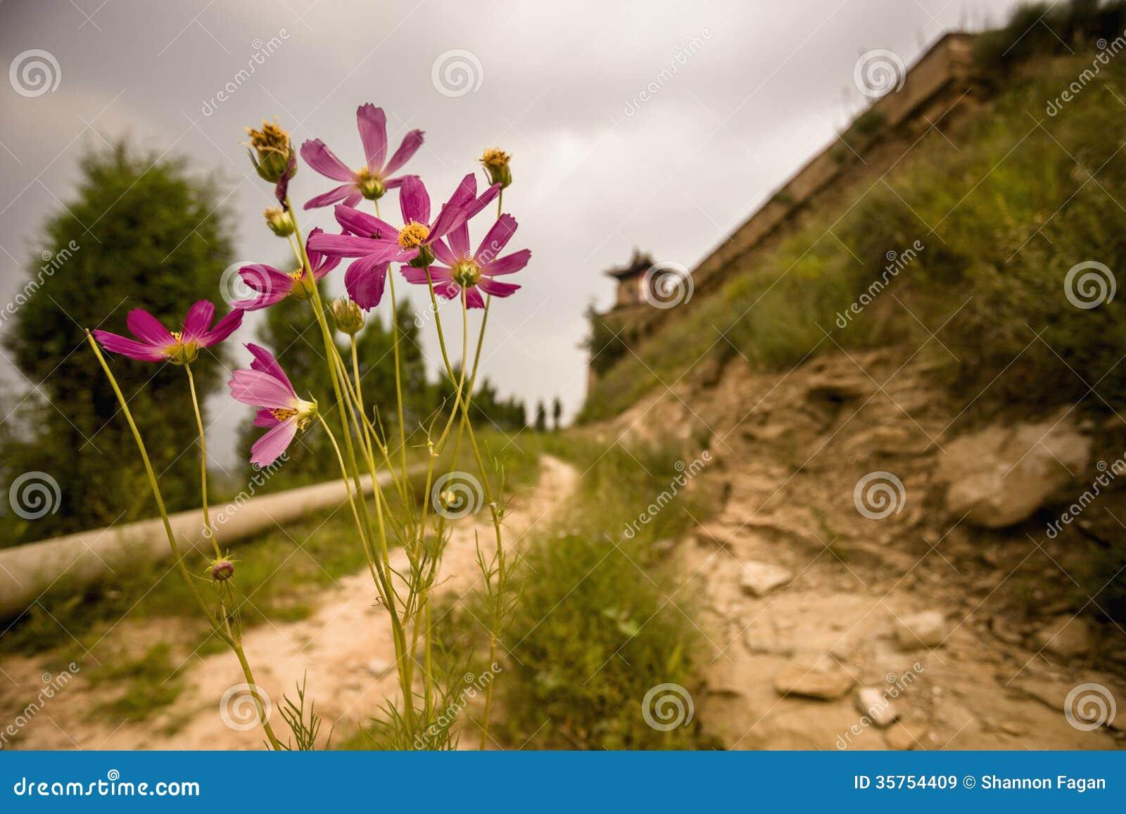 Estrada de terra com as flores que conduzem ao pagode pequeno em uma área rural, província de Shanxi, China