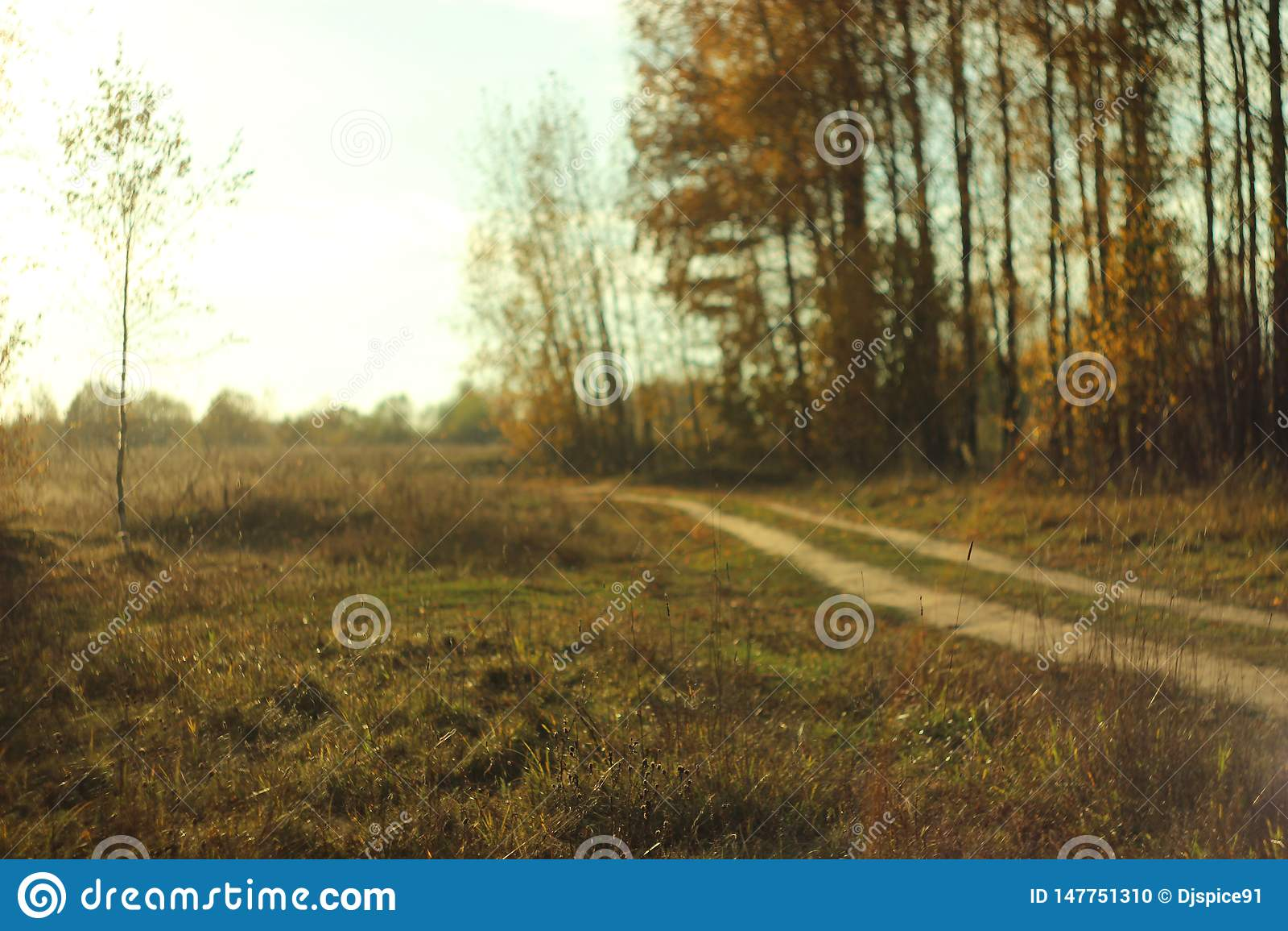 Estrada de terra da floresta em um dia quente
