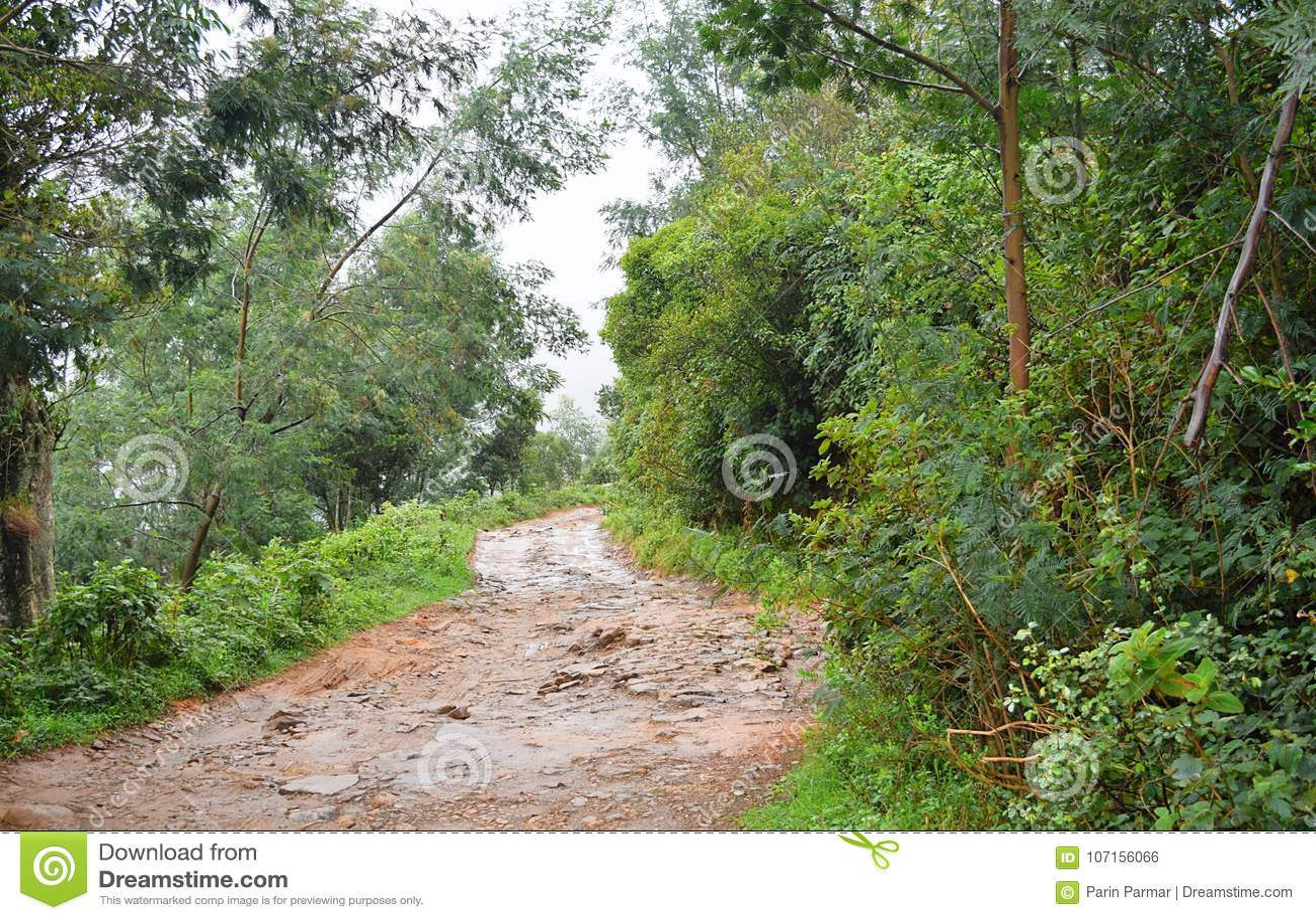 Estrada difícil molhada crua através da floresta e das hortaliças