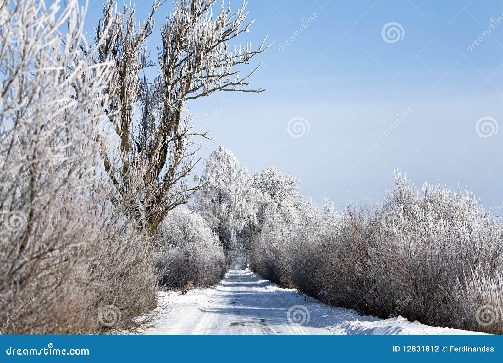 Estrada do inverno com árvores geadas e rime