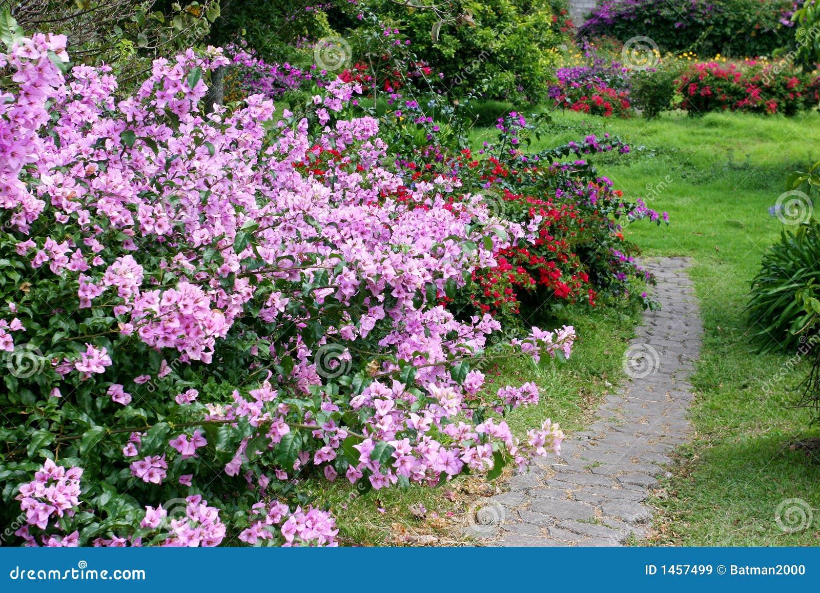 plantas para jardim horizontalSpring Flowers Horizontal Road