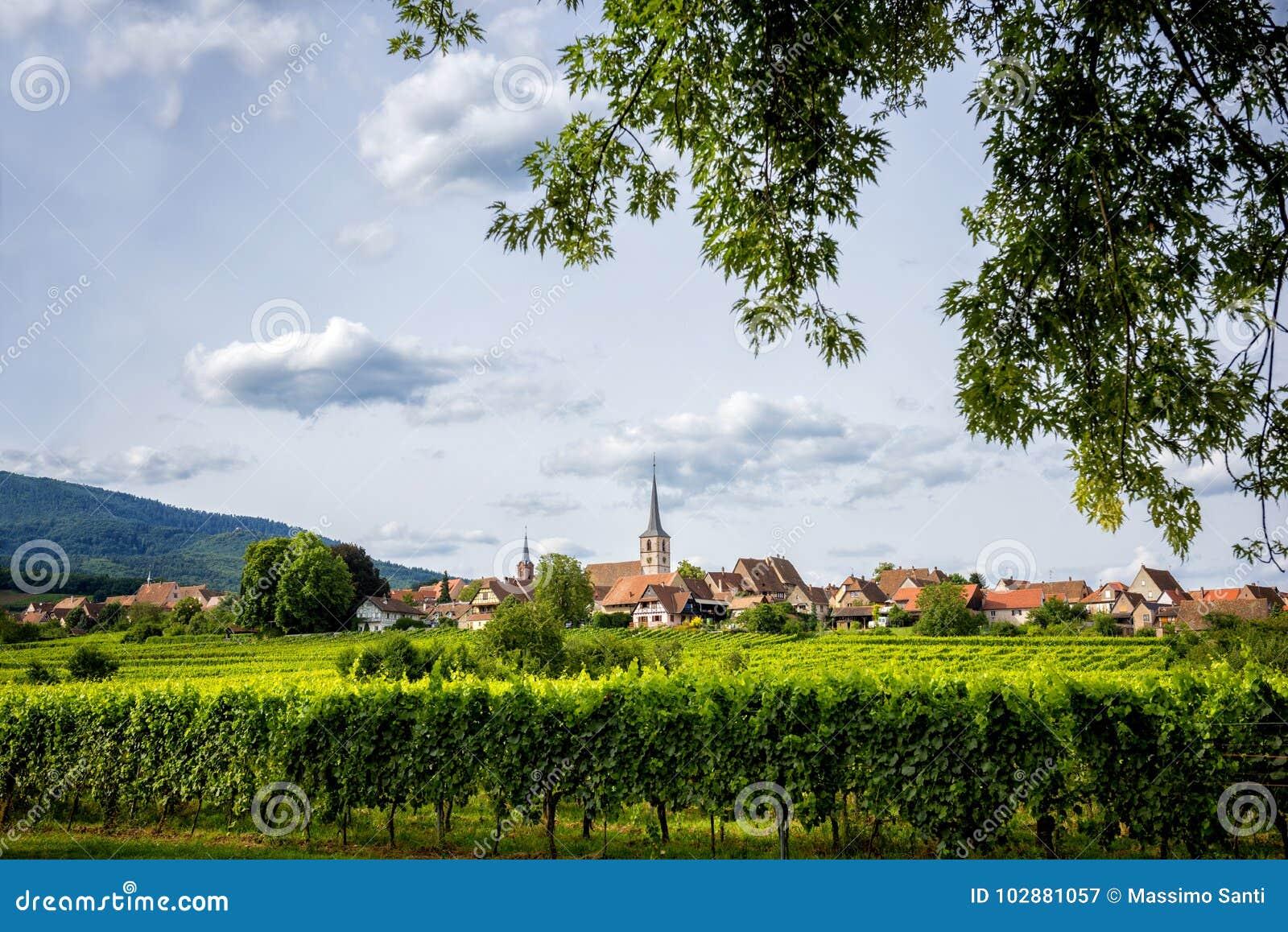 Estrada do vinho na paisagem do vinho de Alsácia
