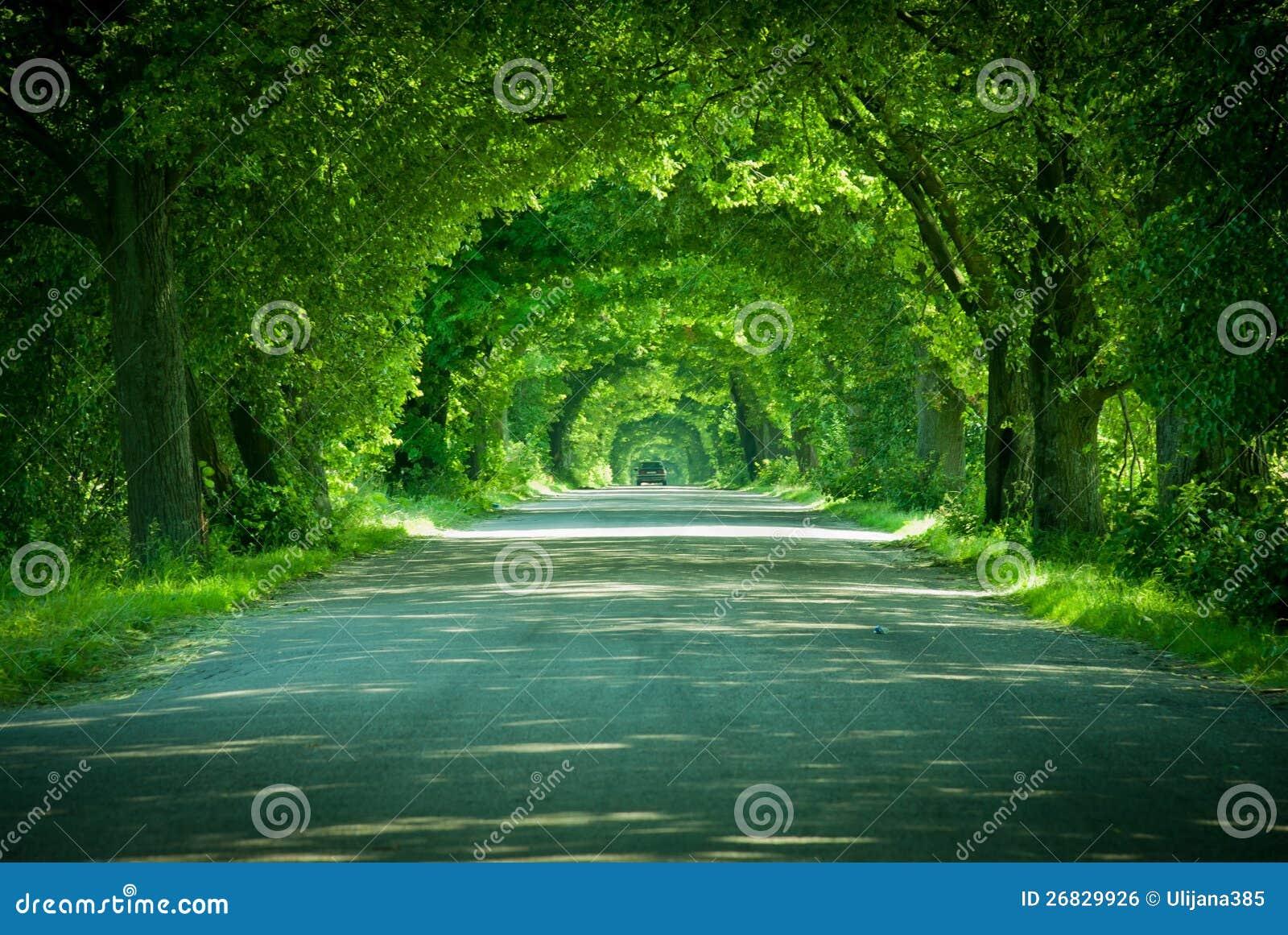 A estrada em um arco verde das árvores