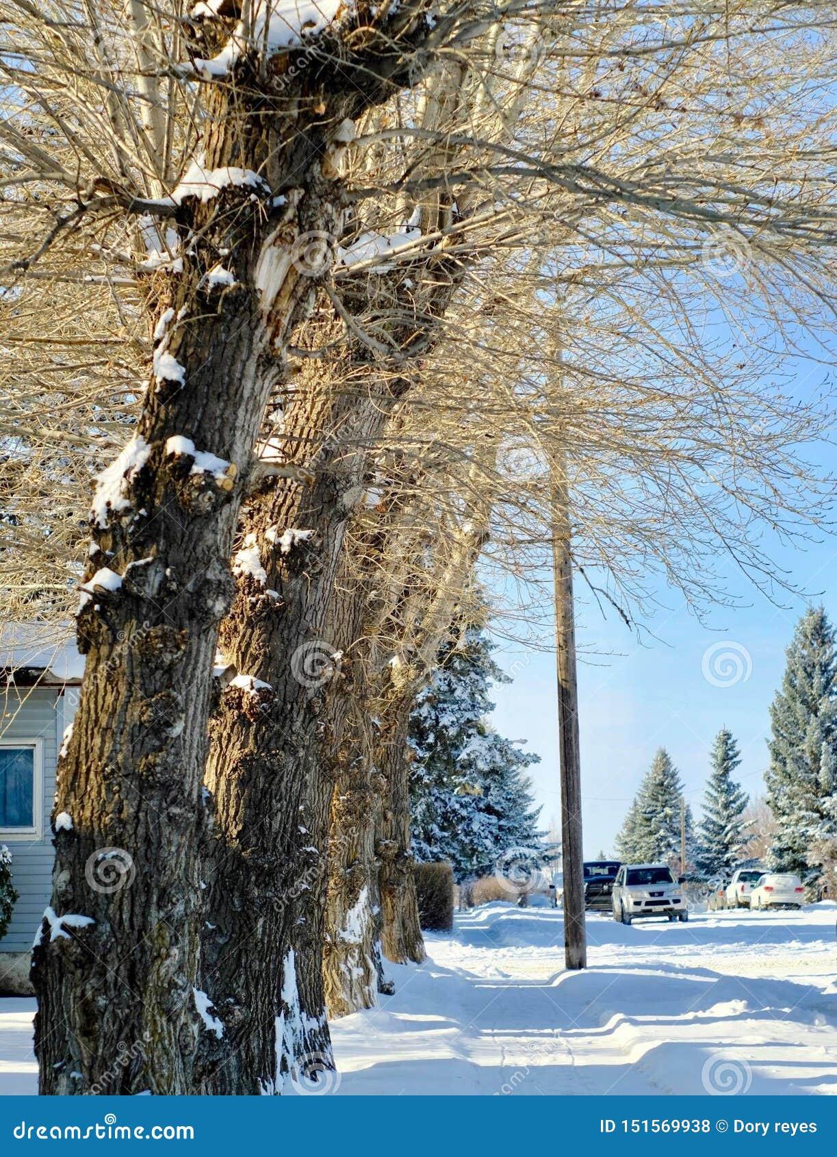 Estrada gelada/nevado
