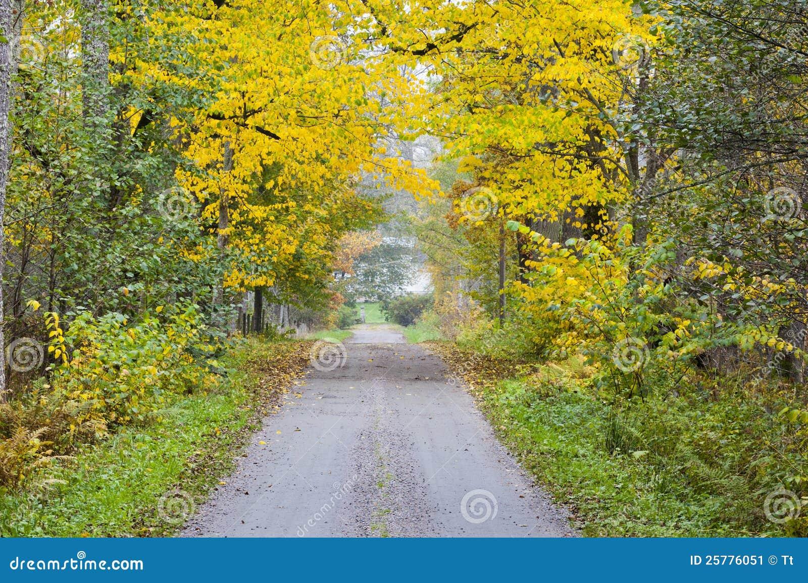 Estrada longa do campo